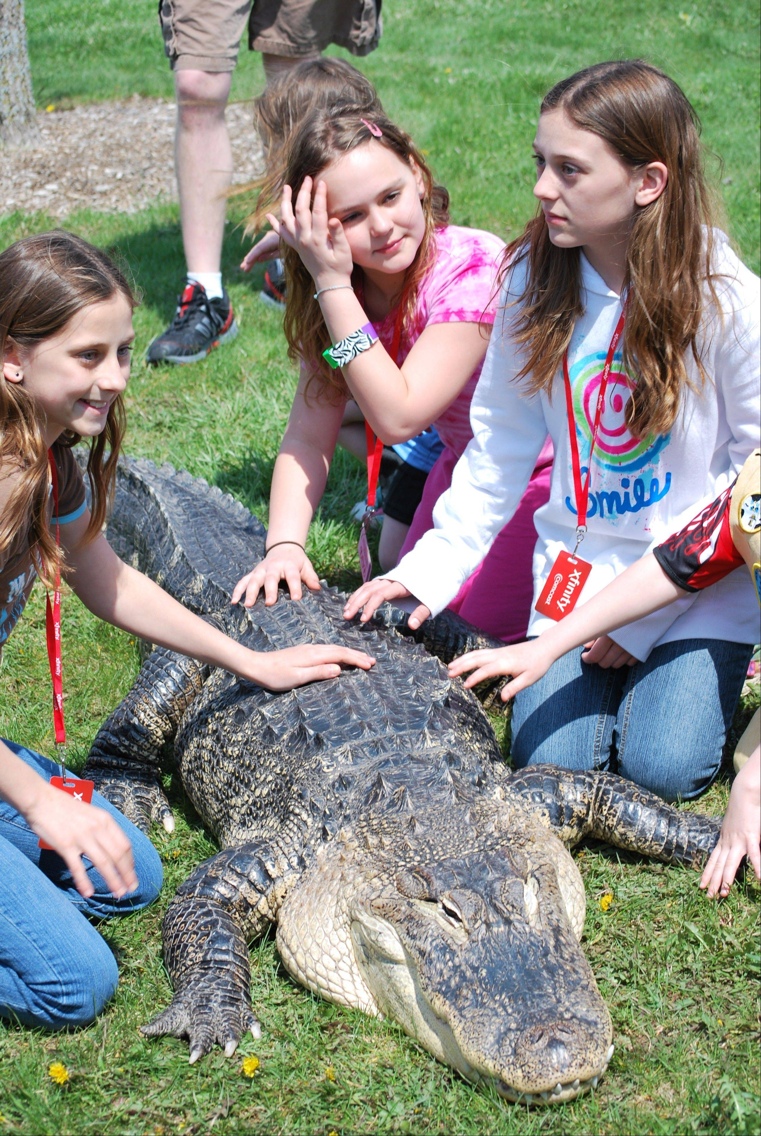 Nikki Greco, from left, Lindsey David and Kayla Greco get up close and personal with an alligator from Jim Nesci's Cold Blooded Creatures show.