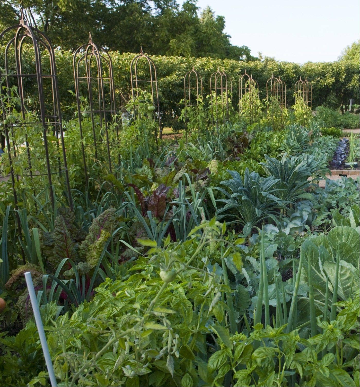 Regenstein Fruit And Vegetable Garden In August.