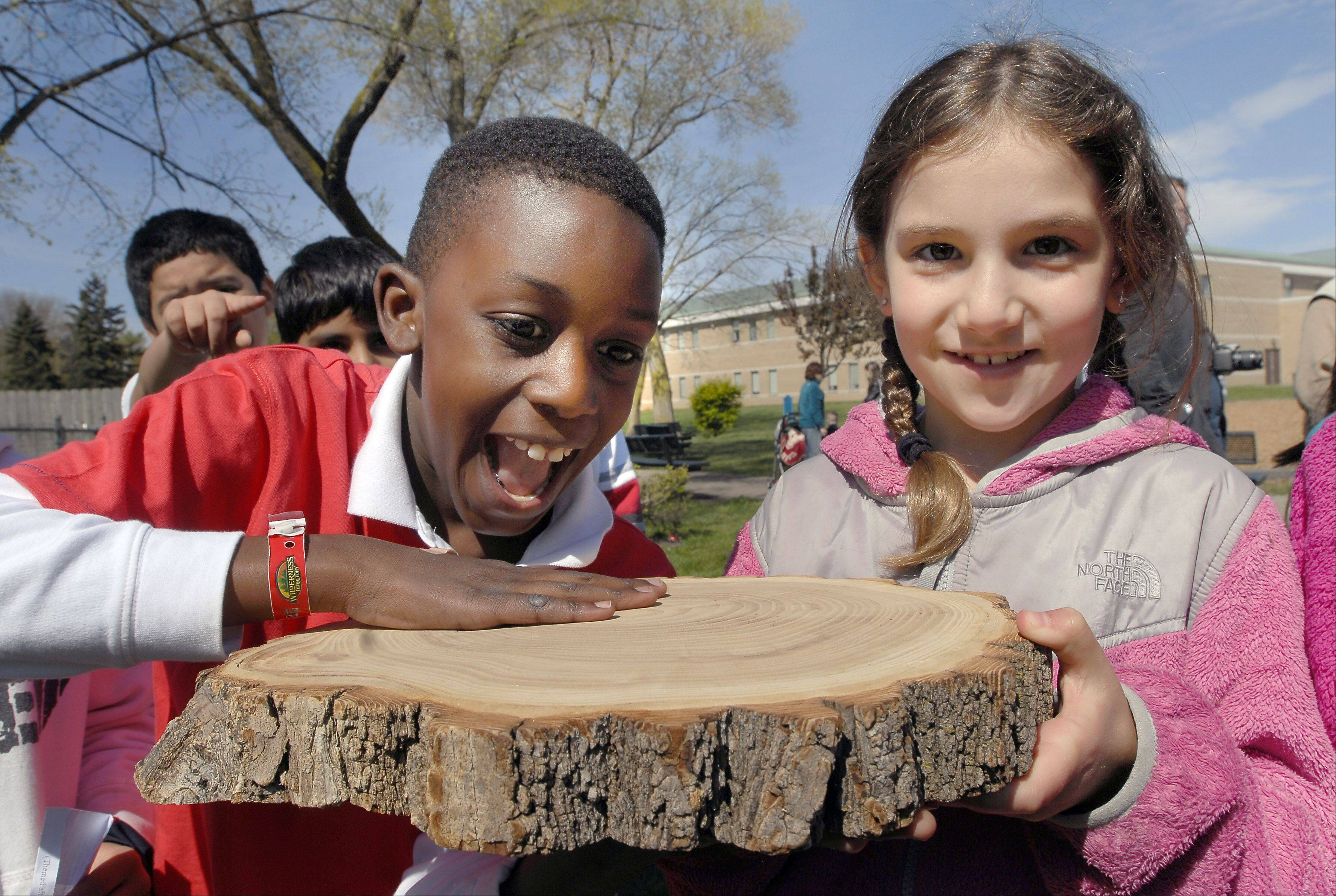 Giovanni McFarlane, left, and Charli Richards correctly count the rings of a tree outside Walt Whitman School in Wheeling.