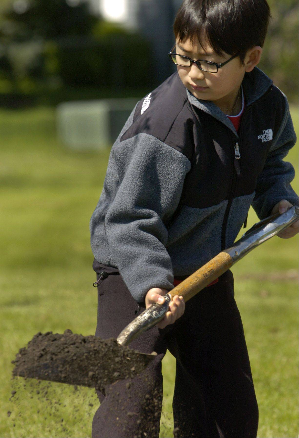 Hayden Kim shovels some dirt on a freshly planted tree at Arbor Day Park in Hoffman Estates.