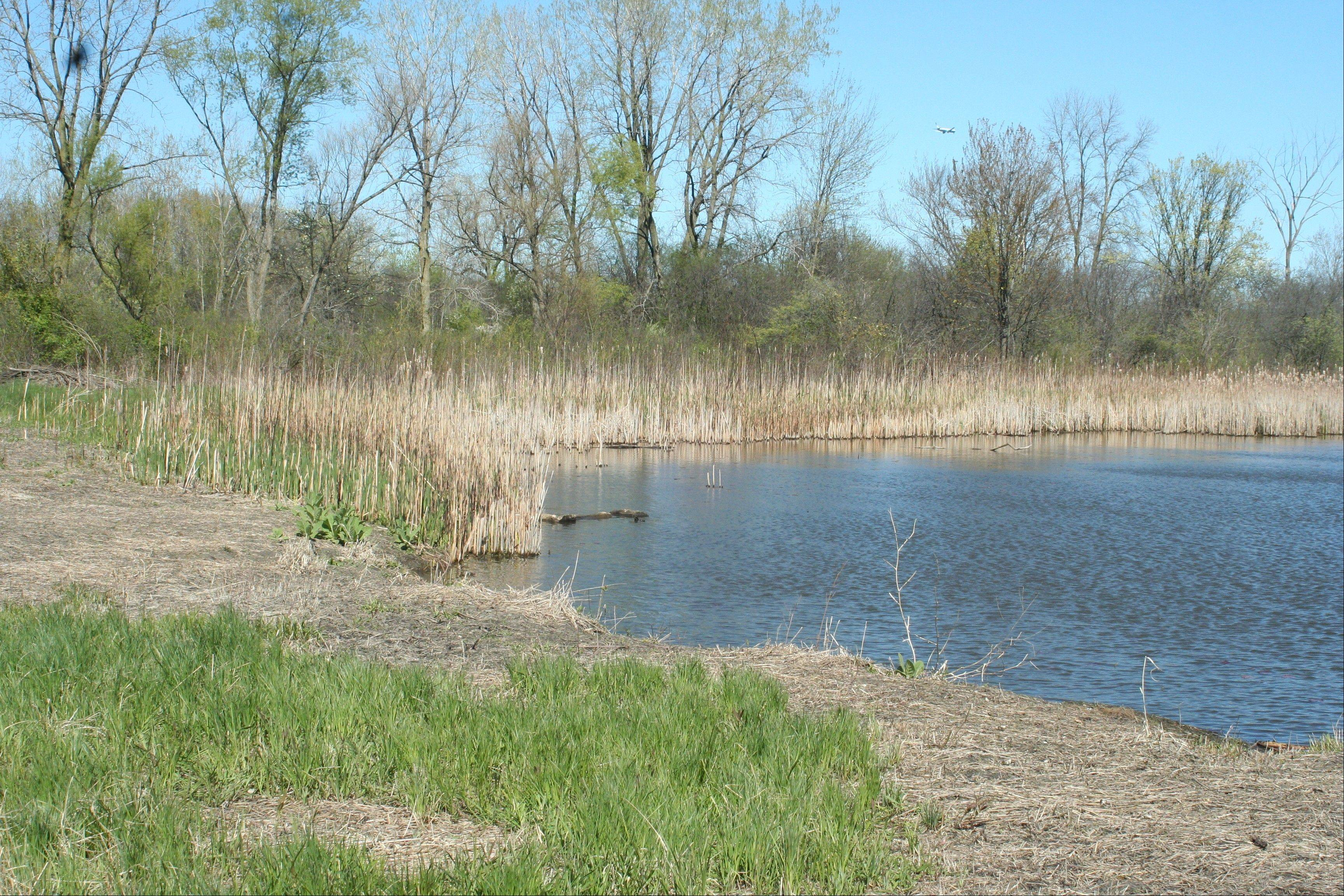 Swift Prairie Forest Preserve near Addison and a buffer area, which totals 111 acres, is one of five DuPage County forest preserves nominated for Illinois Nature Preserve status.