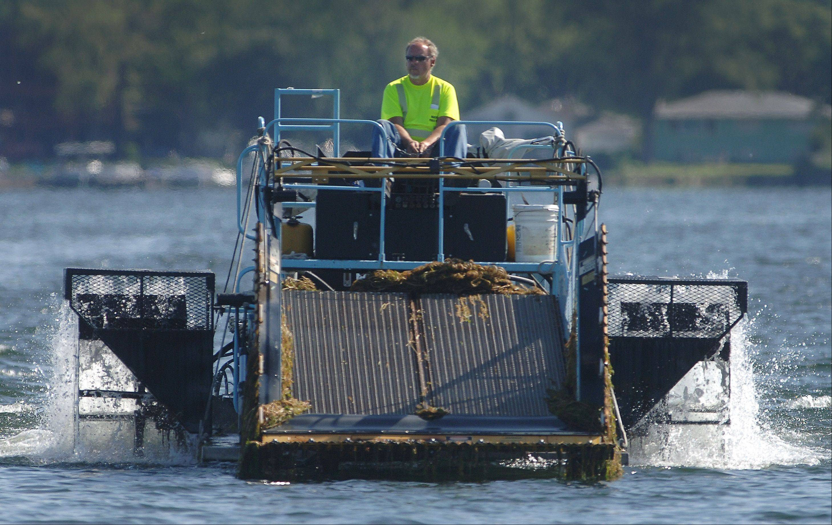 Bob Garrod of the Wauconda Public Works department operates the aquatic plant harvester on Bangs Lake. Garrod heads to shore to unload the weeds he's collected.