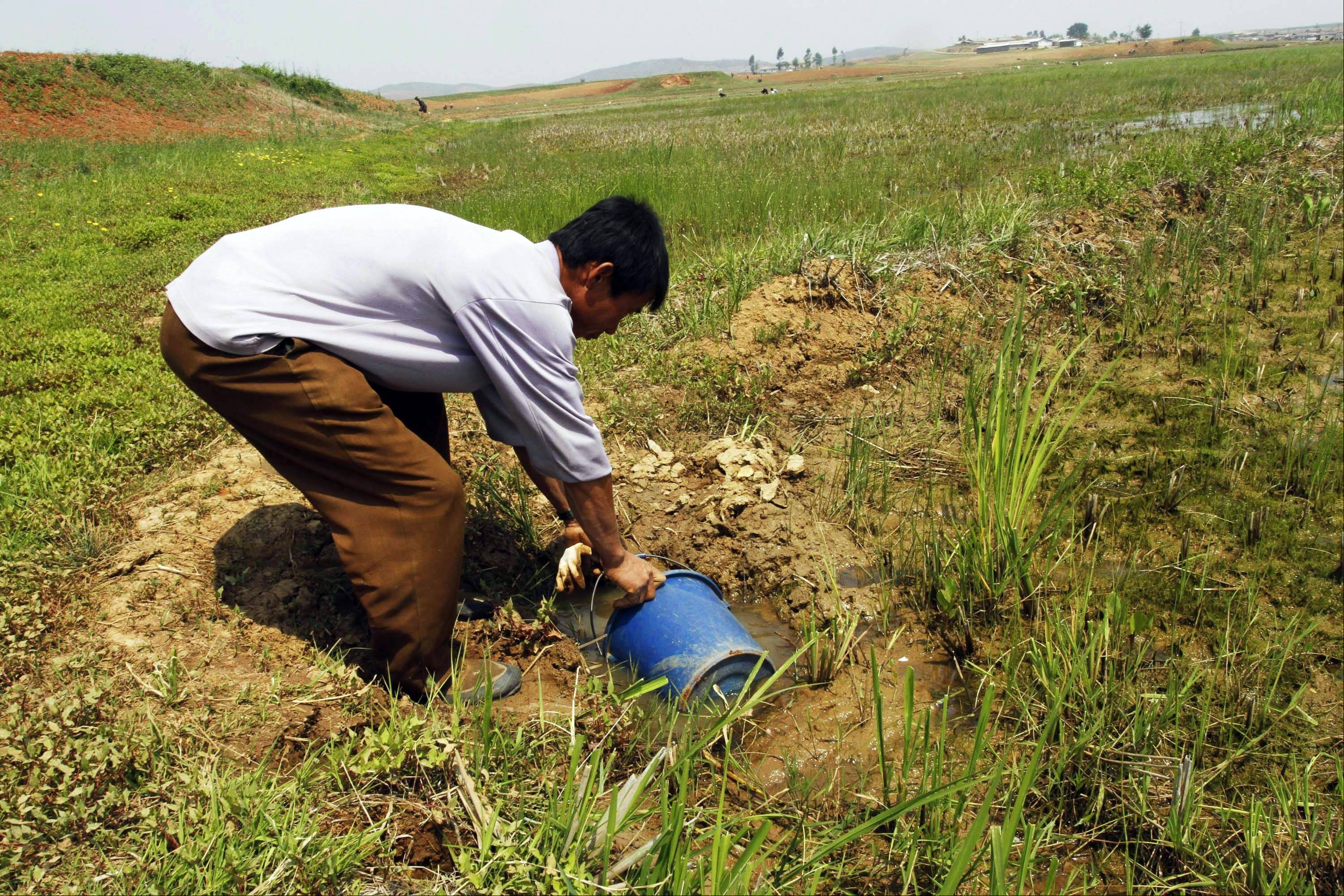On May 25, a North Korean farmer gathers water as he tries to irrigate a field at the Tokhae cooperative farm on the outskirts of Nampho, North Korea. North Korea is reporting a serious drought that could worsen already critical food shortages, but help is unlikely to come from the United States and South Korea following Pyongyang's widely criticized rocket launch.