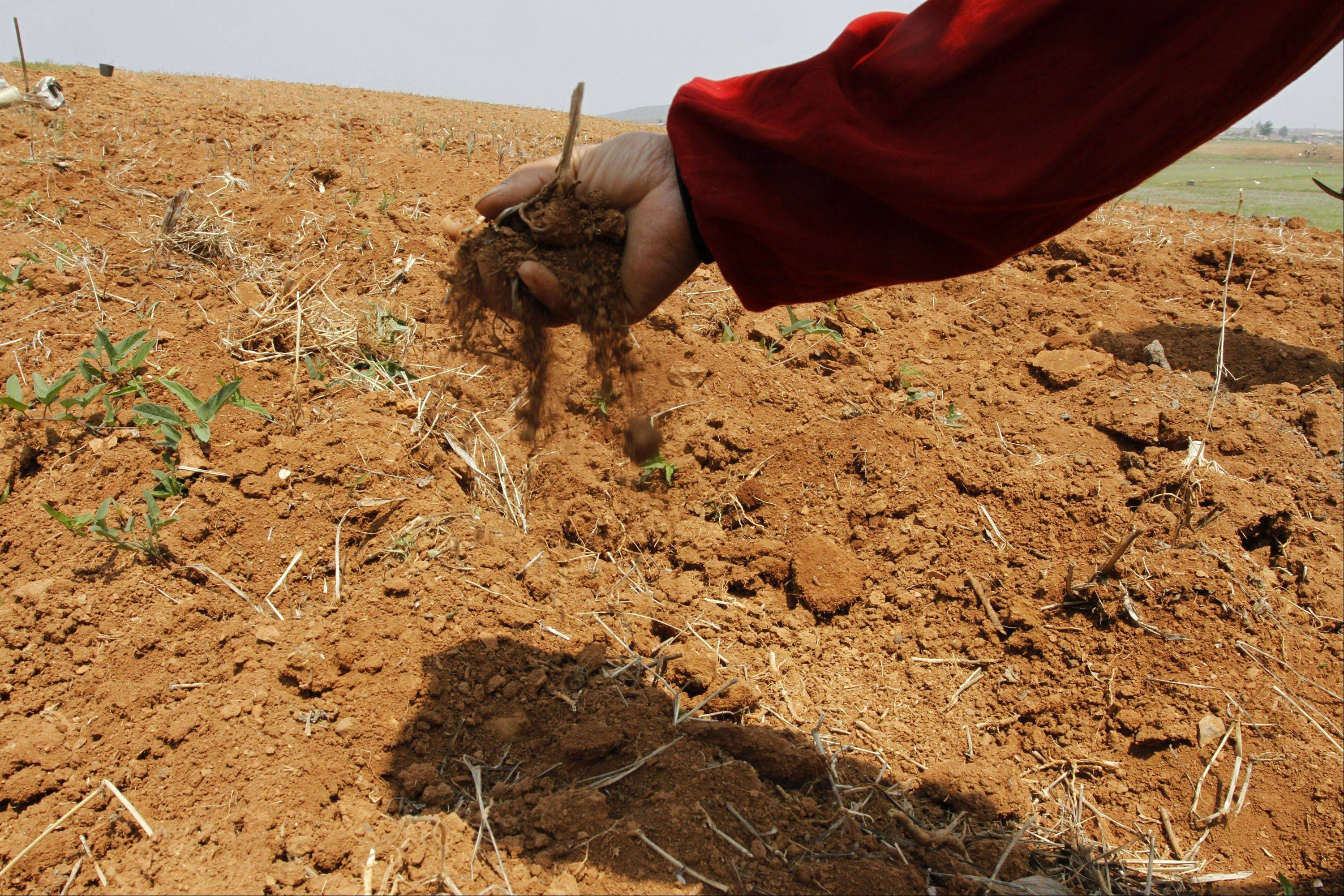 On May 25, a North Korean farmer sifts soil through his fingers in a dry corn field at a the Tokhae cooperative farm on the outskirts of Nampho, North Korea. North Korea is reporting a serious drought that could worsen already critical food shortages, but help is unlikely to come from the United States and South Korea following Pyongyang's widely criticized rocket launch.