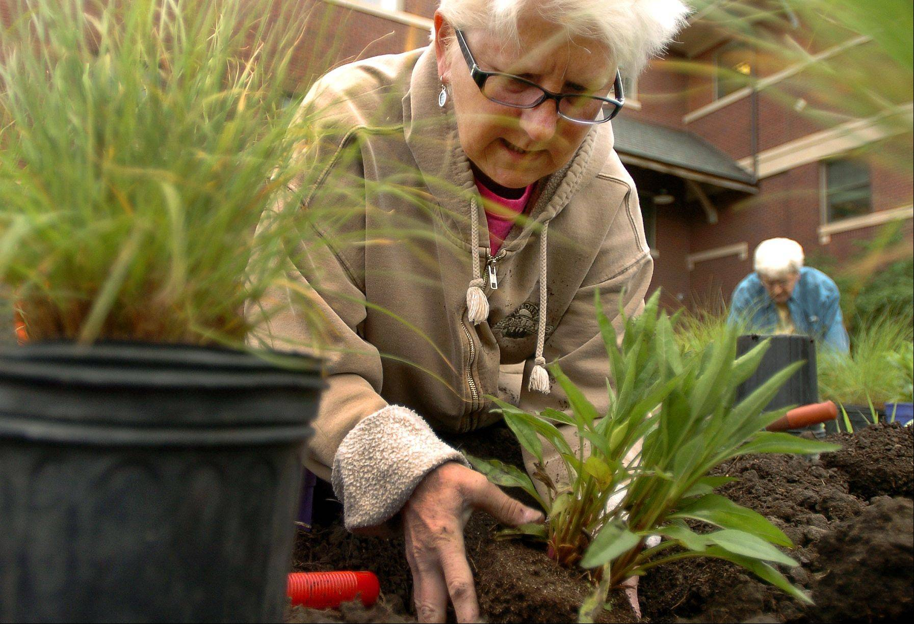 Linda Korn, and members of the Mount Prospect Garden Club plant a variety of perennials at the Mount Prospect Village Hall.