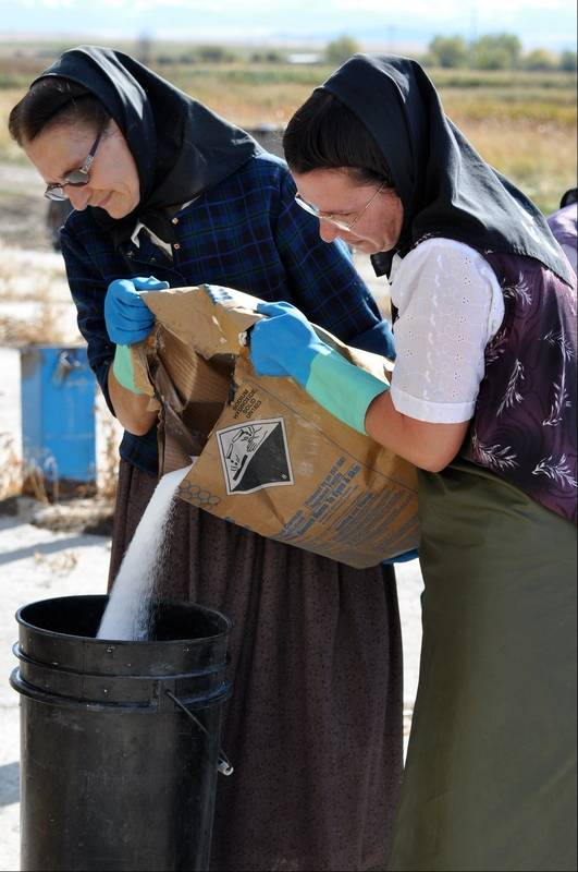 american colony meet the hutterites review and herald
