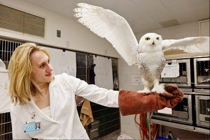 A student with her patient, Annie owl. Photo by L. Brian Stauffer.