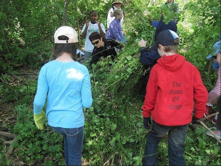 Barrington students work to pull up garlic mustard and other invasive plants.