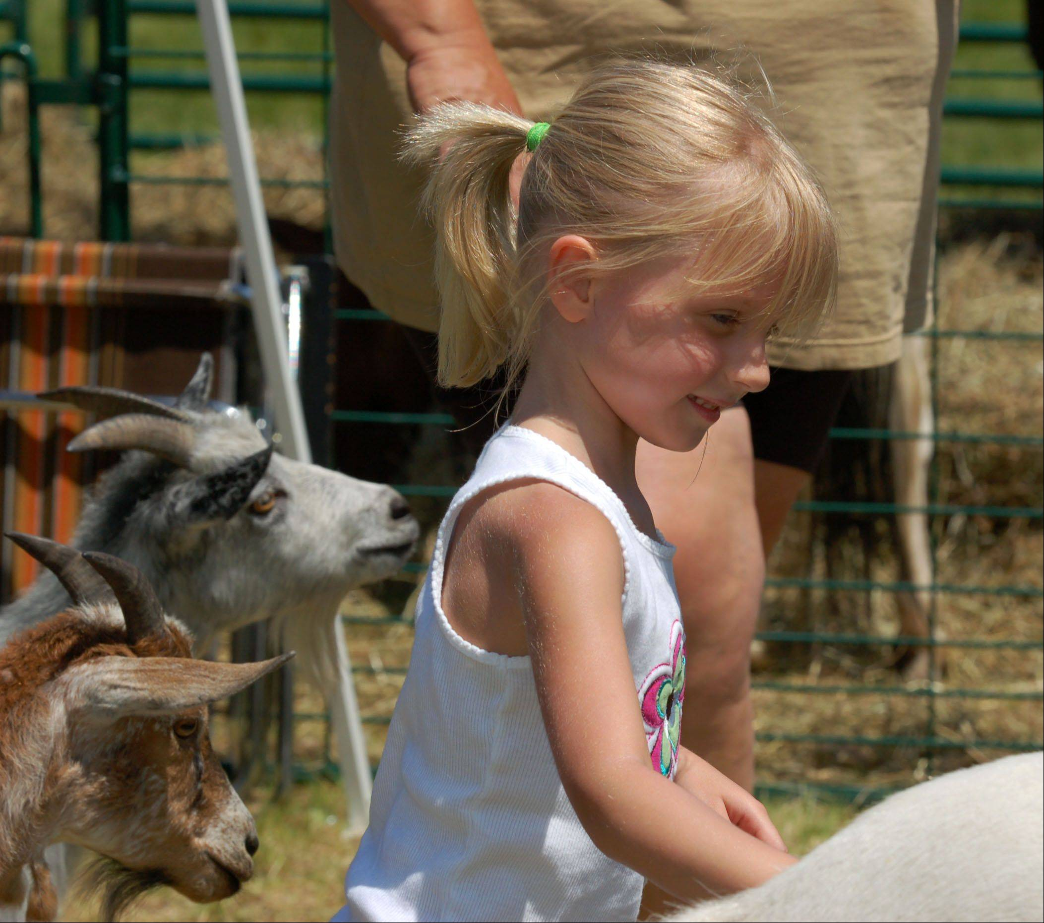 Ashlyn Pauwels, 5, of Carpentersville visits the petting zoo at last year's Gilberts Community Days. This year's festival is set for Thursday, May 31 through Sunday, June 3 in Town Center Park.