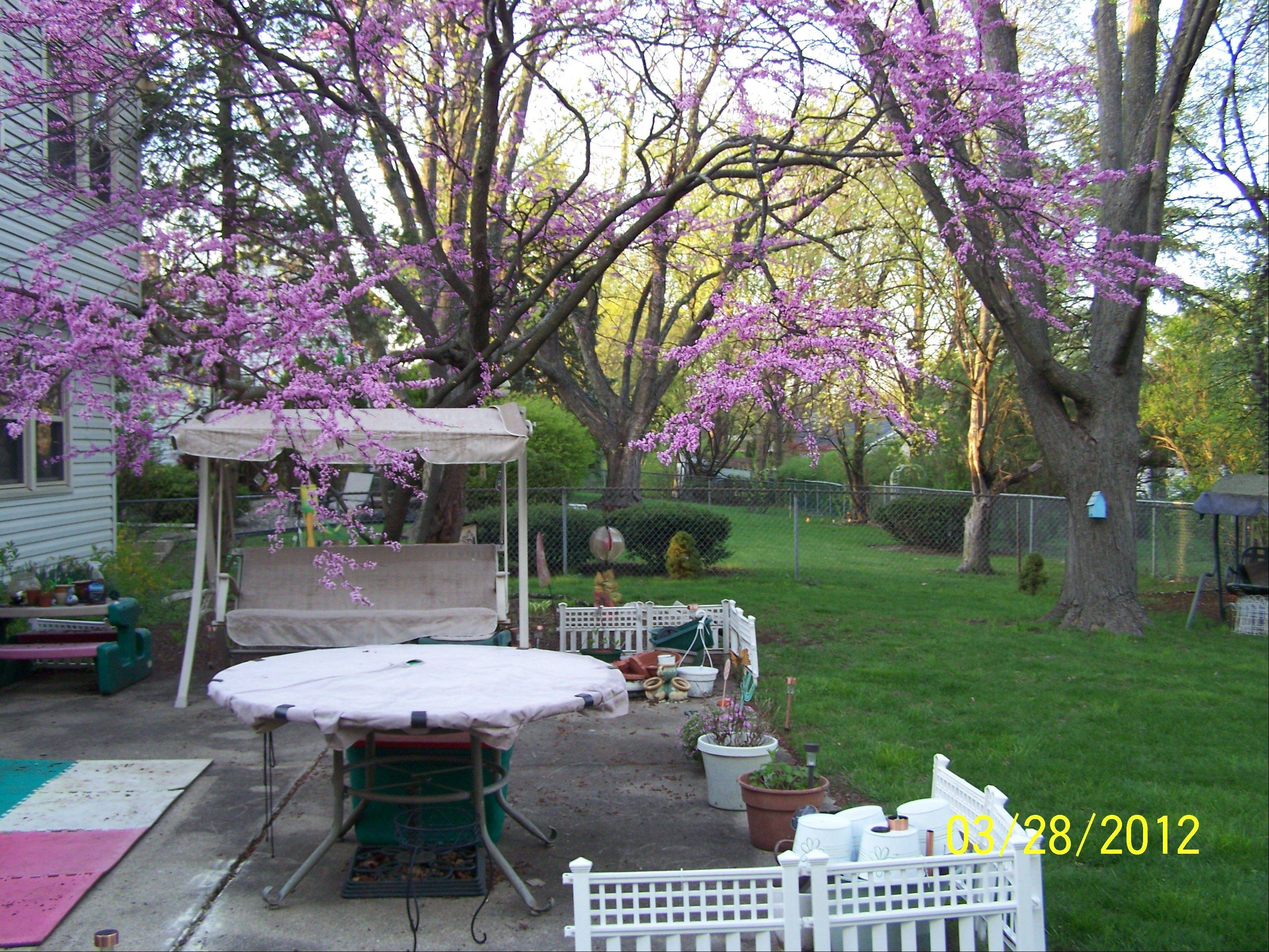 Backyard makeover Week 5: AARP couple and disabled daughter need a backyard