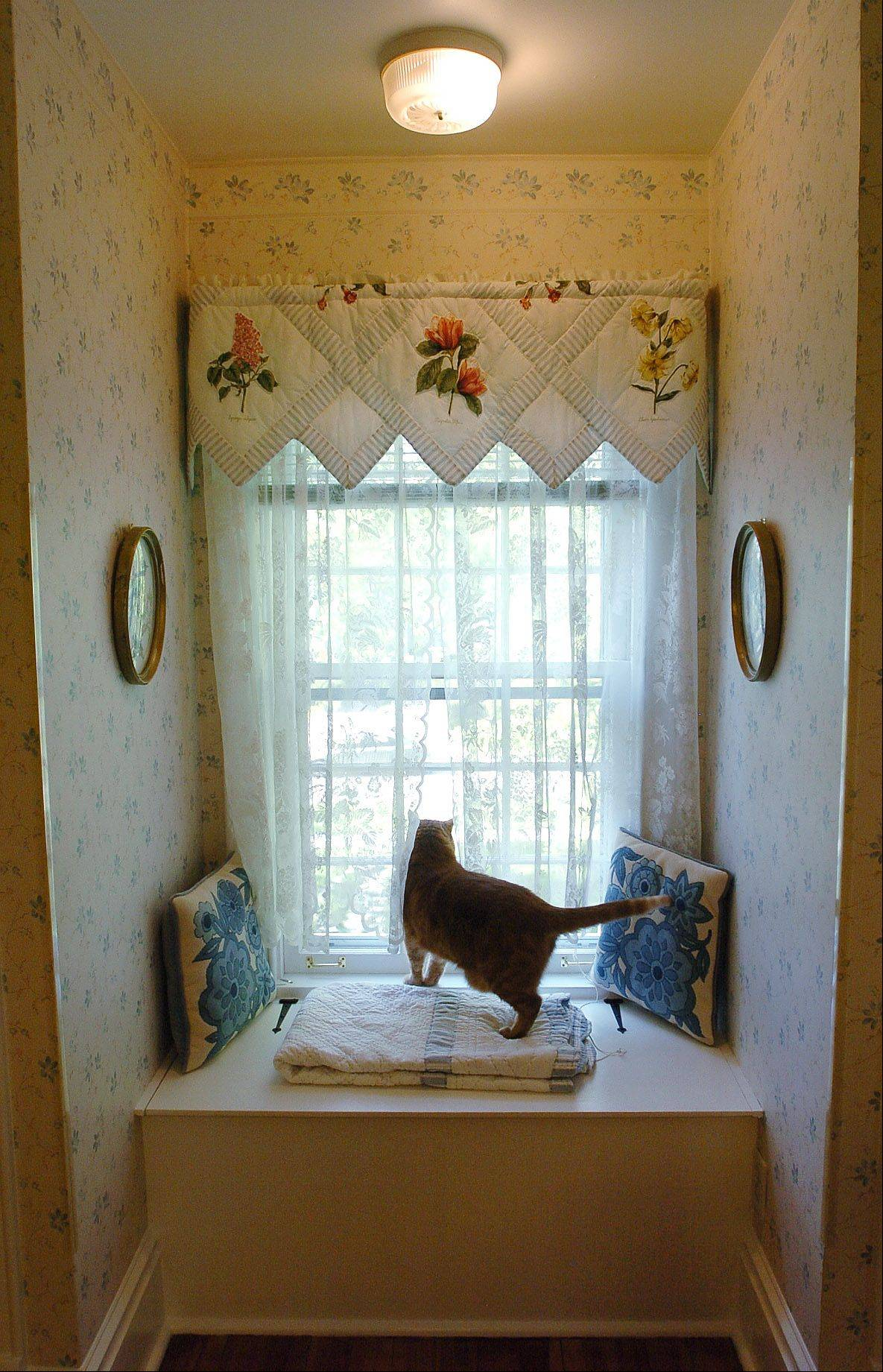Simba surveys his domain under a valance Daisy Kessler made for the home's blue and white bedroom.