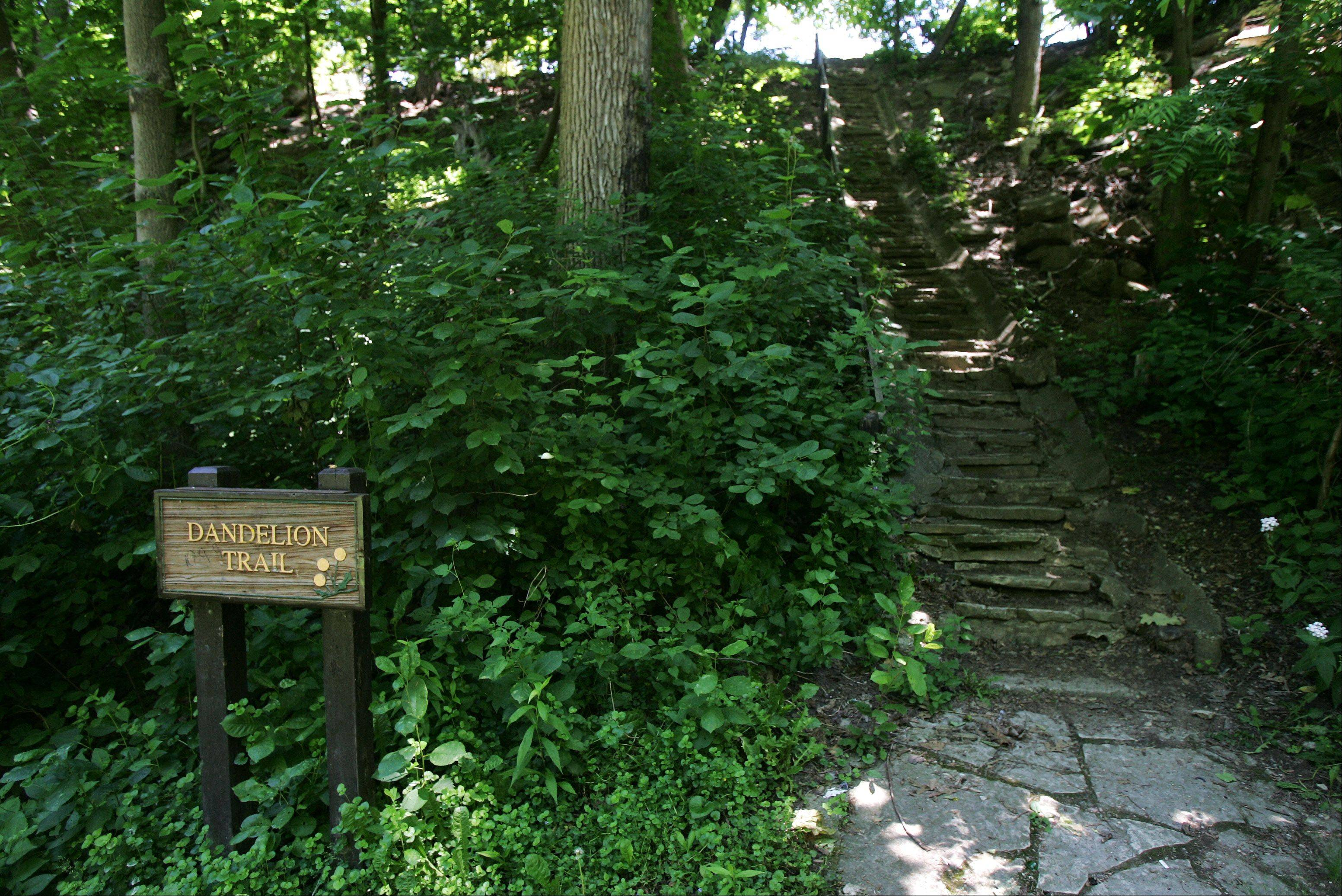 "The 113 steps stairs mentioned in the book ""Dandeleion Wine"" at Ray Bradbury Park in Waukegan. Science-fiction master Ray Bradbury, a Waukegan native, is being remembered here as an imaginative, inspirational and important author. He died Tuesday in Los Angeles."
