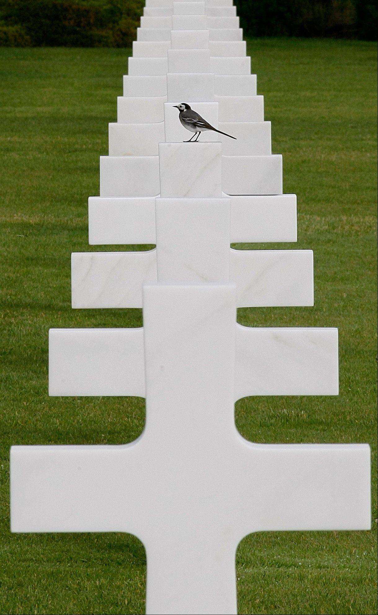 A bird stands on one of the 9387 tombs at the Colleville American military cemetery, in Colleville sur Mer, western France, Wednesday June 6, 2012, on the day of the commemoration of the 68th anniversary of the D-Day.