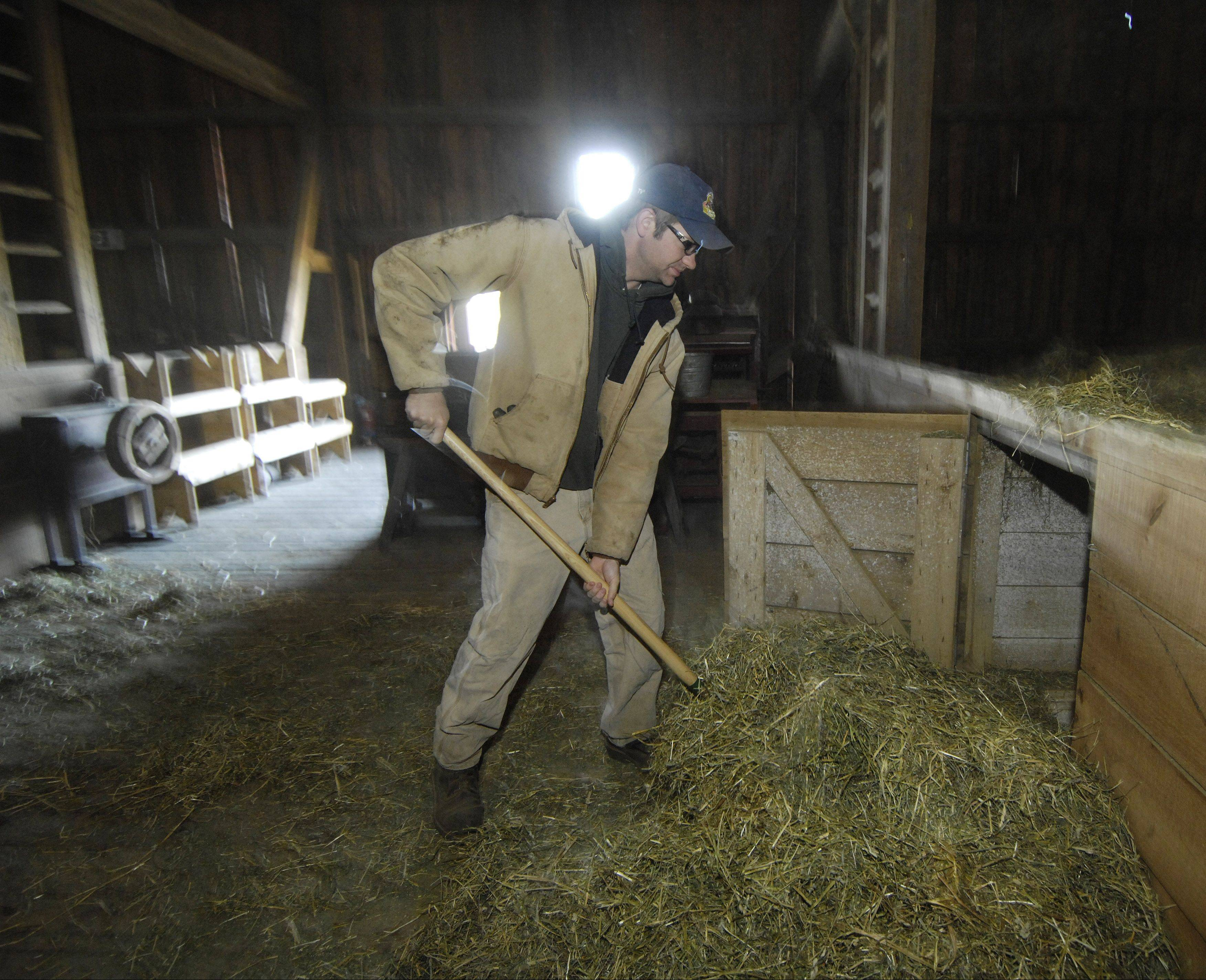 Using a pitchfork, Zimmerman drops hay down to the lower level of the barn while feeding the animals at the Volkening Heritage Farm.