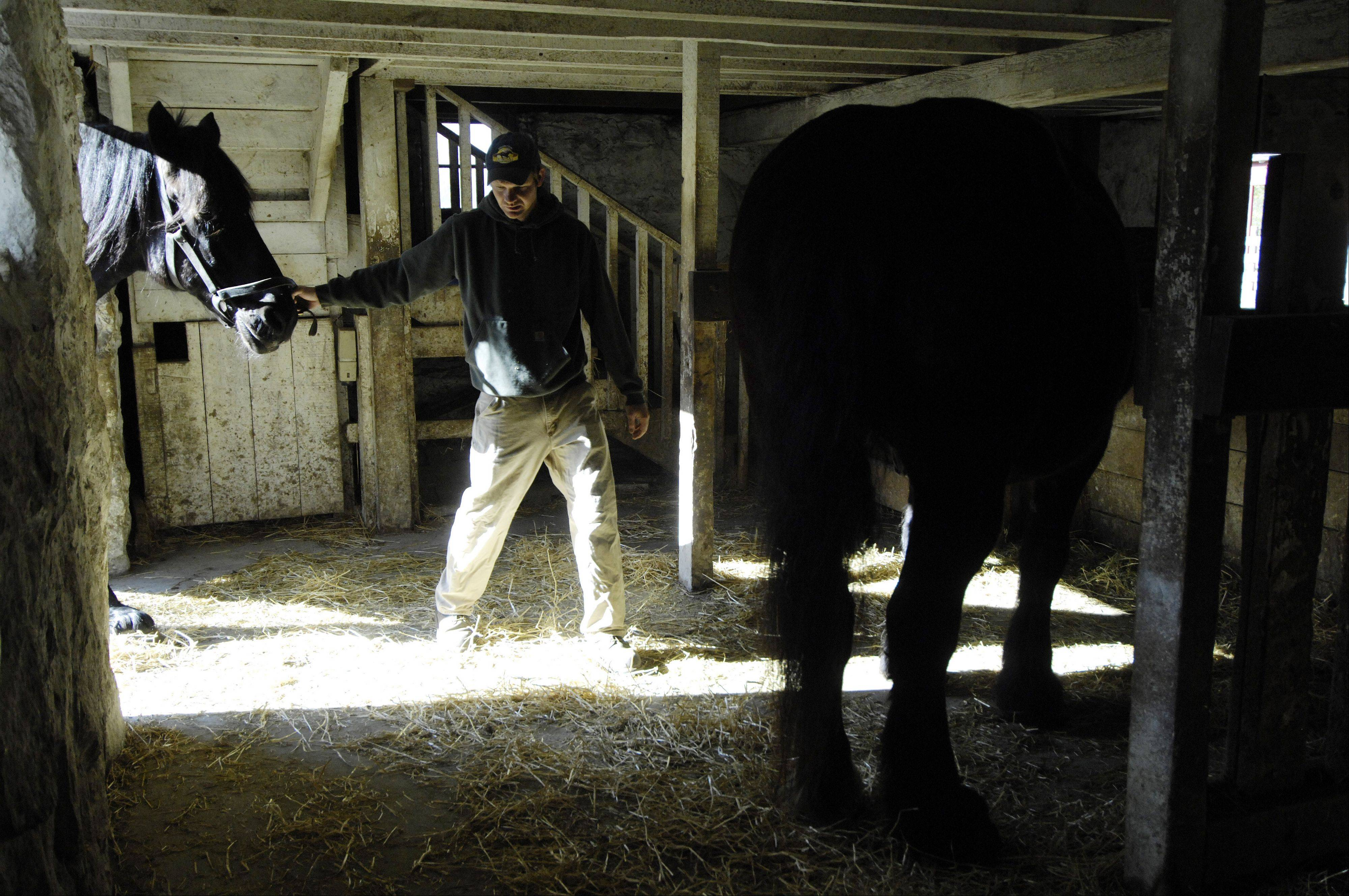 Zimmerman brings the horses into the barn for grooming.