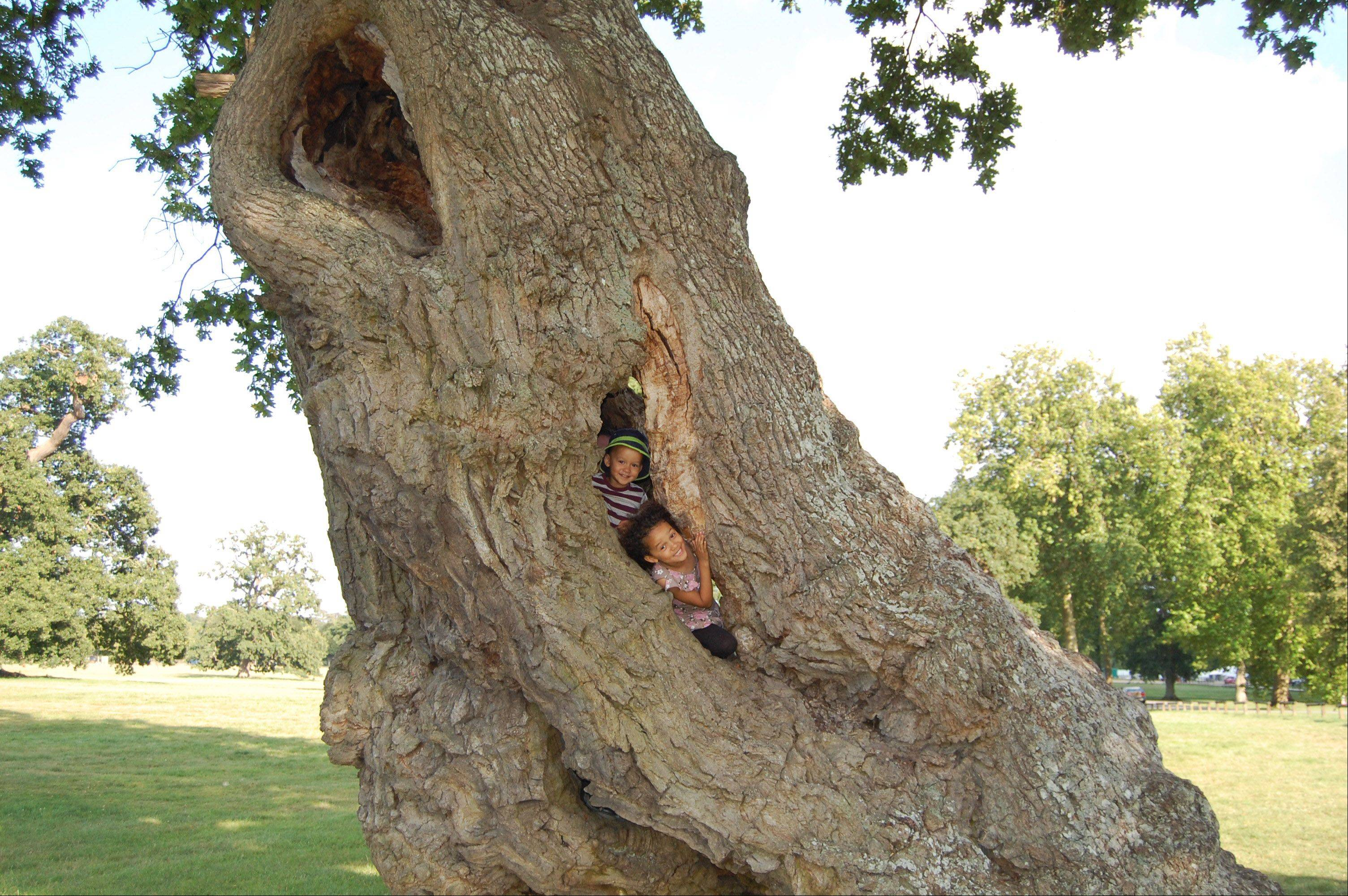"I took my grandkids to Blenheim Palace, the home of Winston Churchill, and we happened upon a long row of massive oak trees. Although they were living, they were hollow inside. Estelle and Jason climbed inside and took a peek out of one of the ""windows""."