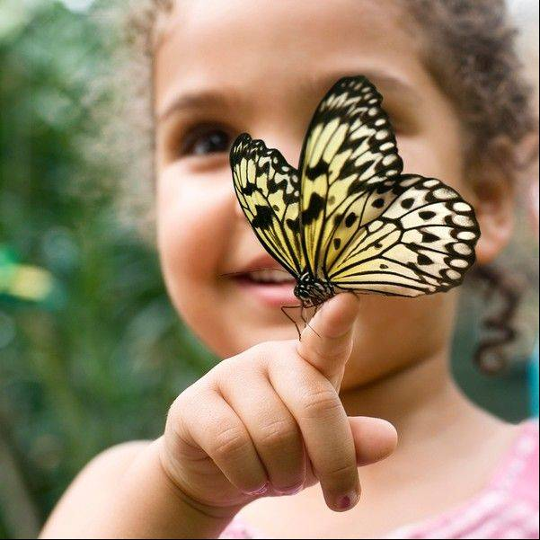 The exhibit allows children to experience butterflies up close.