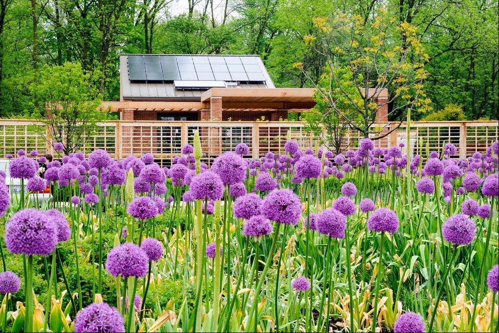Alliums are just a few of the many flowers and plants found in the Children's Growing Garden.