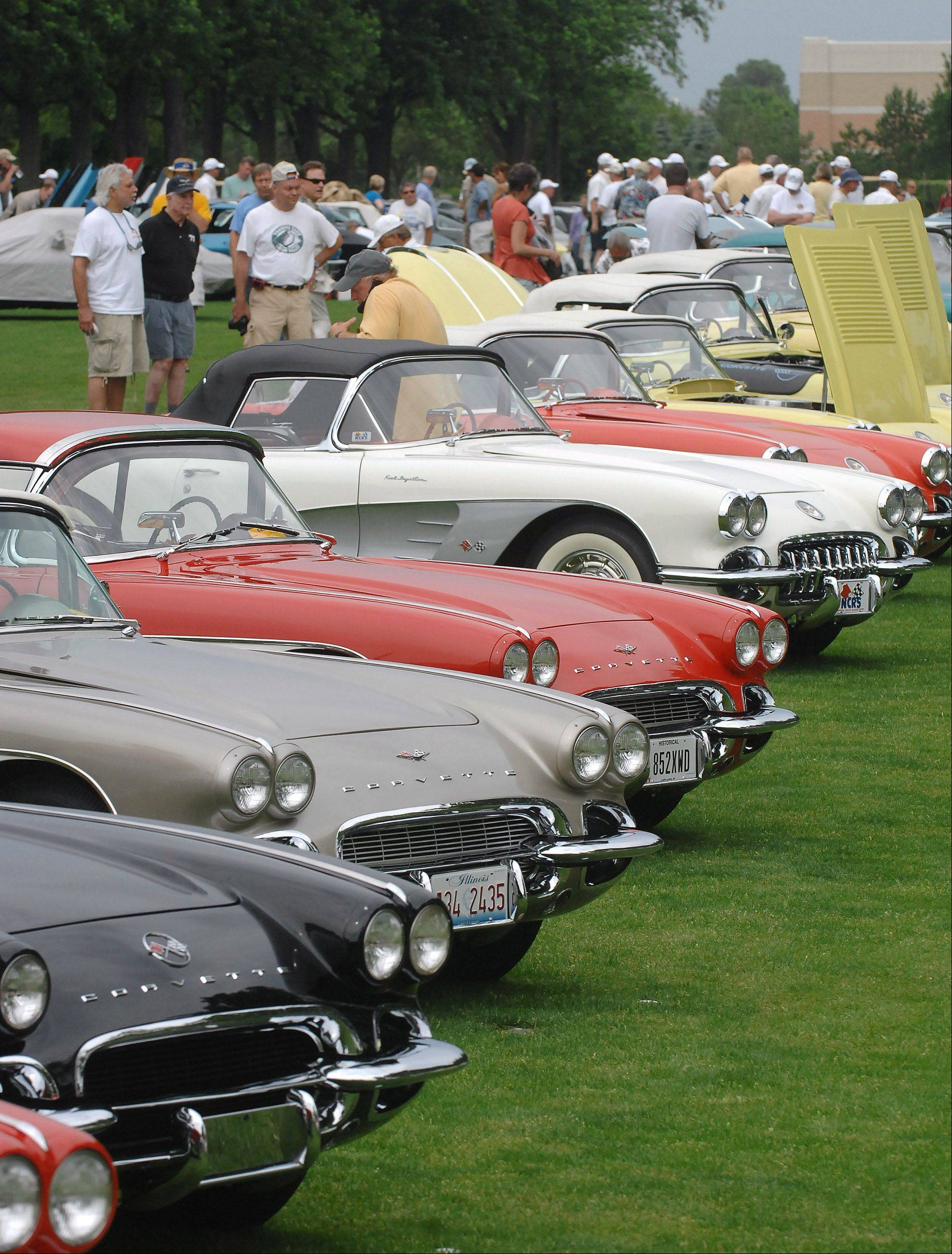 Corvettes from the 1950s sit on the certification field for judging at a previous edition of Bloomington Gold at Pheasant Run Resort in St. Charles.