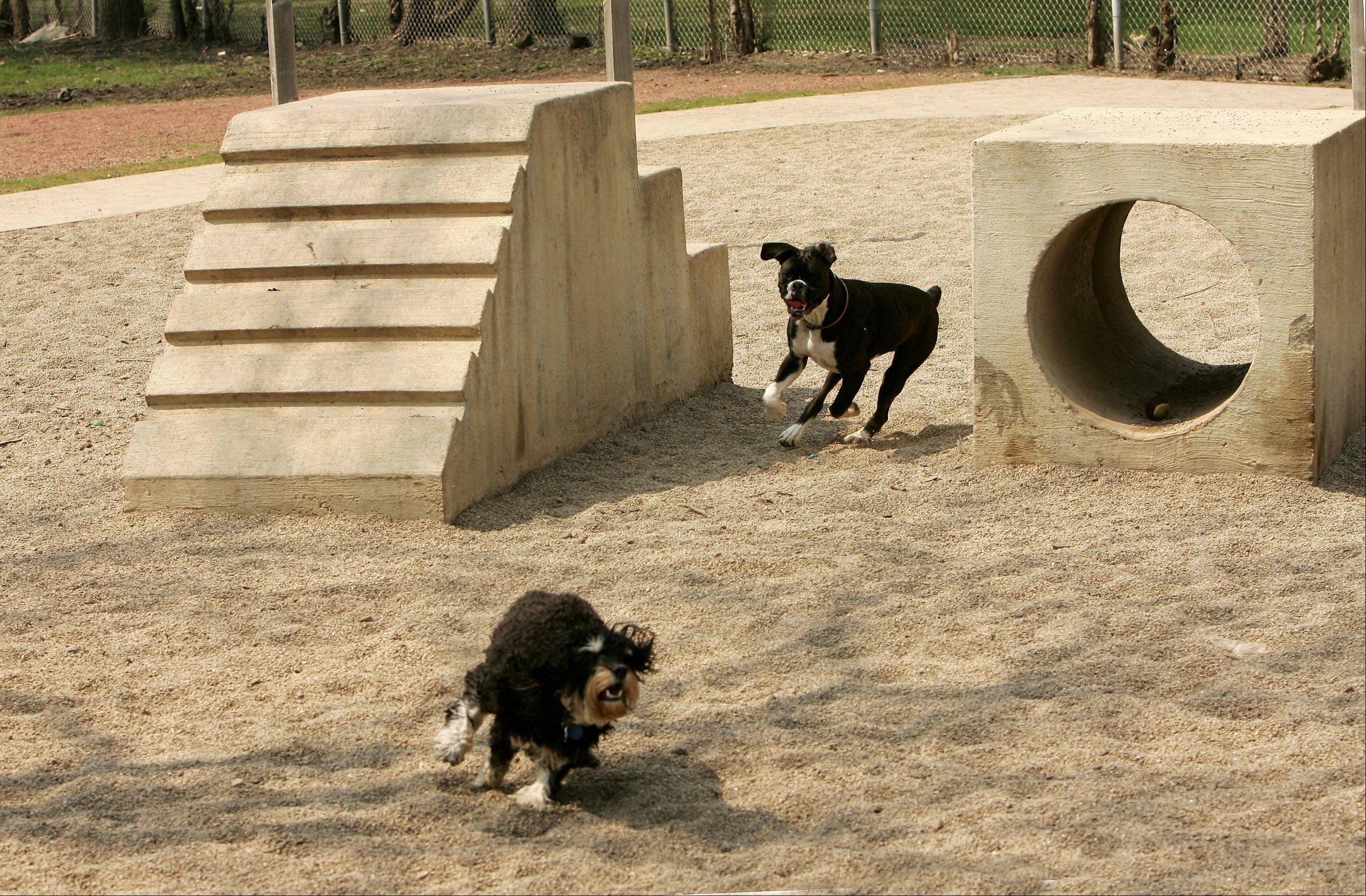 Buckeye, a boxer, chases Cosmo, a schnoodle, through the exercise equipment at the Jaycee Memorial Park dog exercise area in Deerfield. Dog owners would like the Arlington Heights Park District to add a dog park.