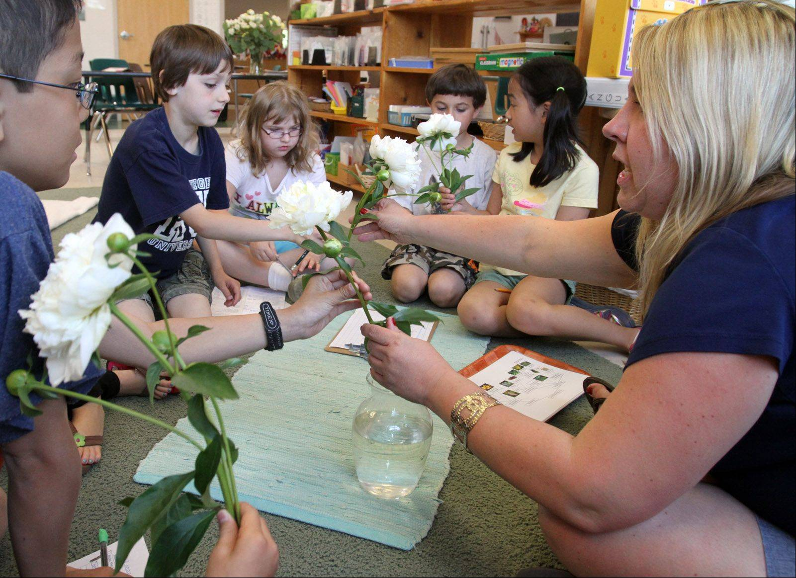 George LeClaire/gleclaire@dailyherald.comSharon Reisenbuchler directress (teacher), teaches 6-9 year-olds about flowers at the Montessori school in Wheeling on Wednesday, May 23.