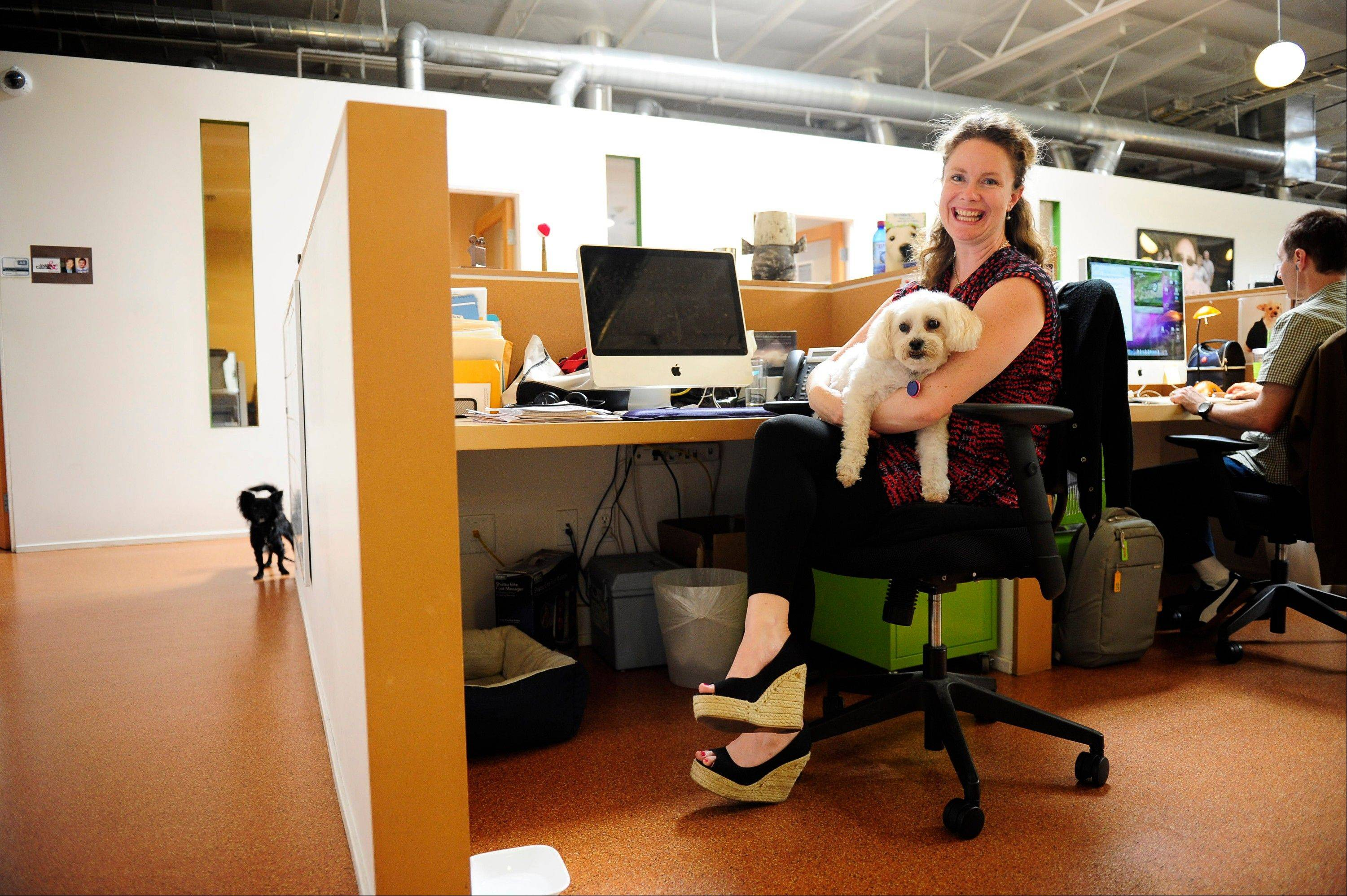 Erin McCormack poses with her dog, Dolly, a Maltese mix, a while at work at Authentic Entertainment in Burbank, Calif. Dolly is one of millions of dogs that accompany their owners to dog-friendly businesses across the country every day. Even more will join her next Friday for Take Your Dog to Work Day.