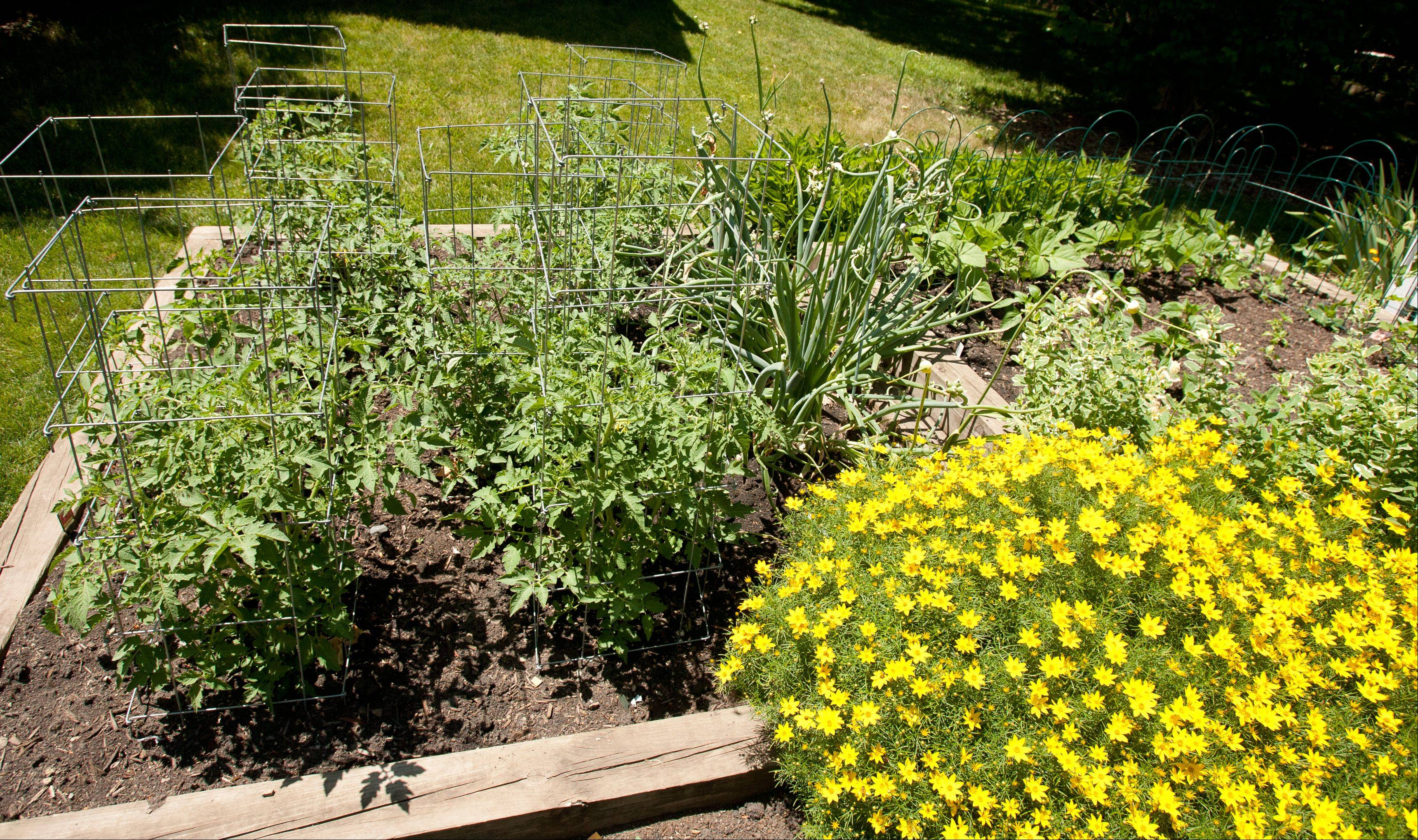 Kathy and Gary Lenke of Lisle believe a garden should be changed as it matures. Their vegetable garden has expanded to include herbs.