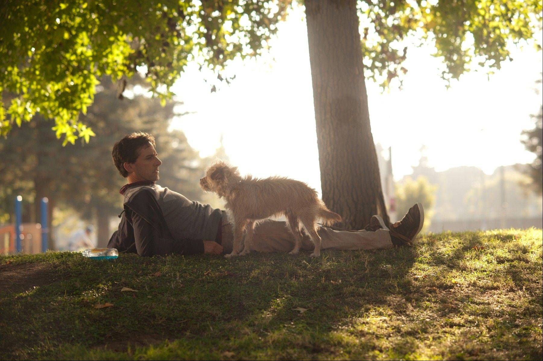 "Sorry the dog (played by Aleistair the terrier) romps with Steve Carell in ""Seeking a Friend For the End of the World."""