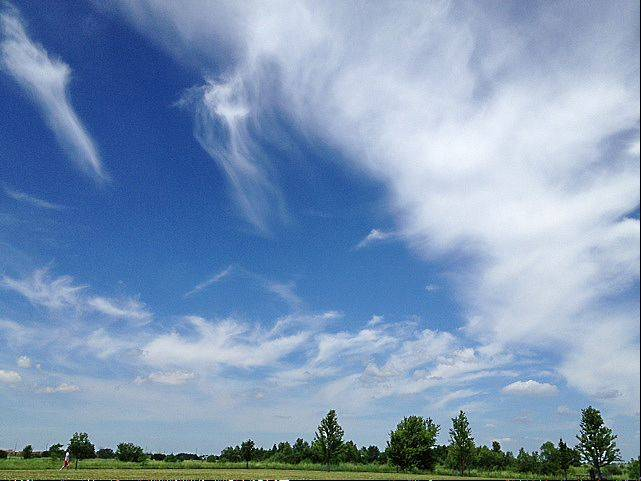Blue skies ahead! This was taken at the Springbrook Prairie in Naperville.