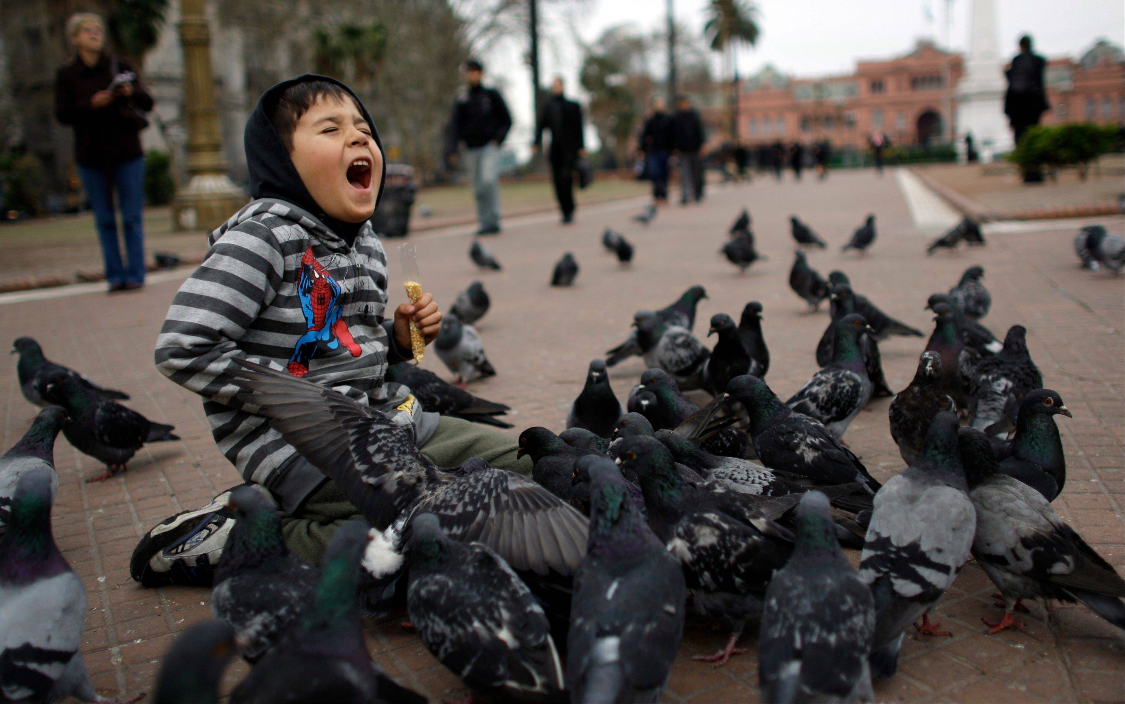 A boy plays with pigeons in the Plaza de Mayo in Buenos Aires.