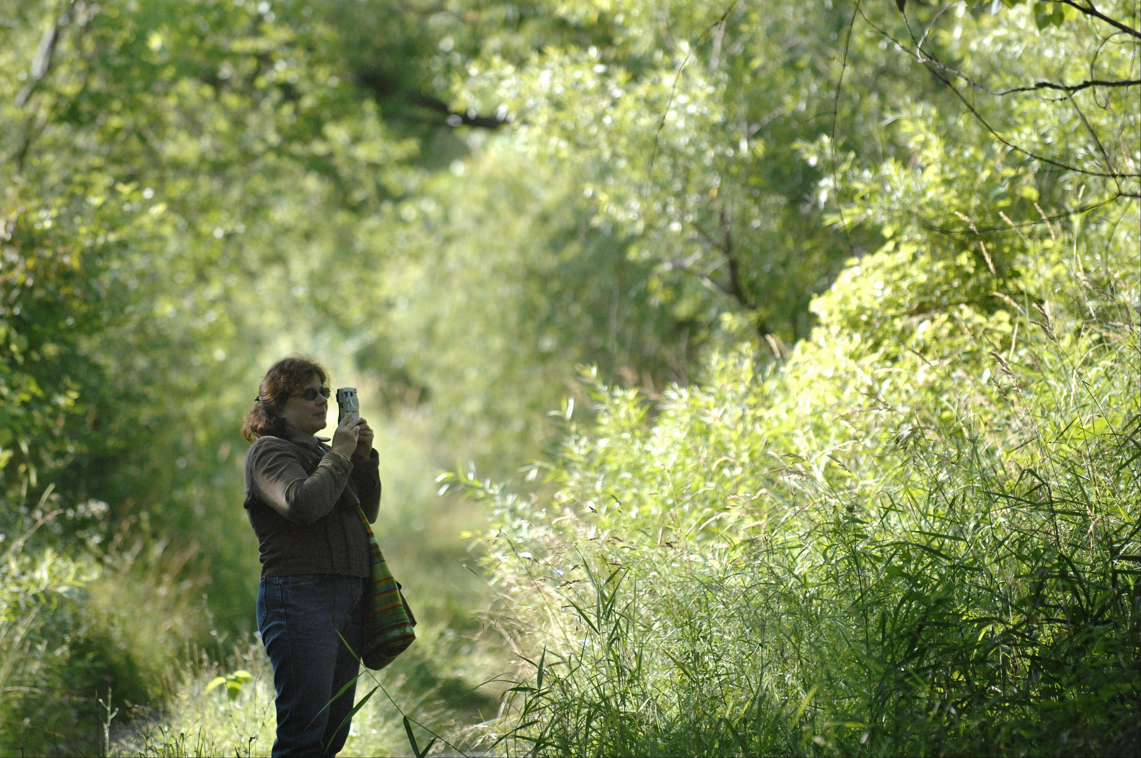 Mary Hogan of Elgin takes photos while on an early morning bird walk with Kane County Audubon Society at Freeman Kame-Meagher Forest Preserve in Gilberts.