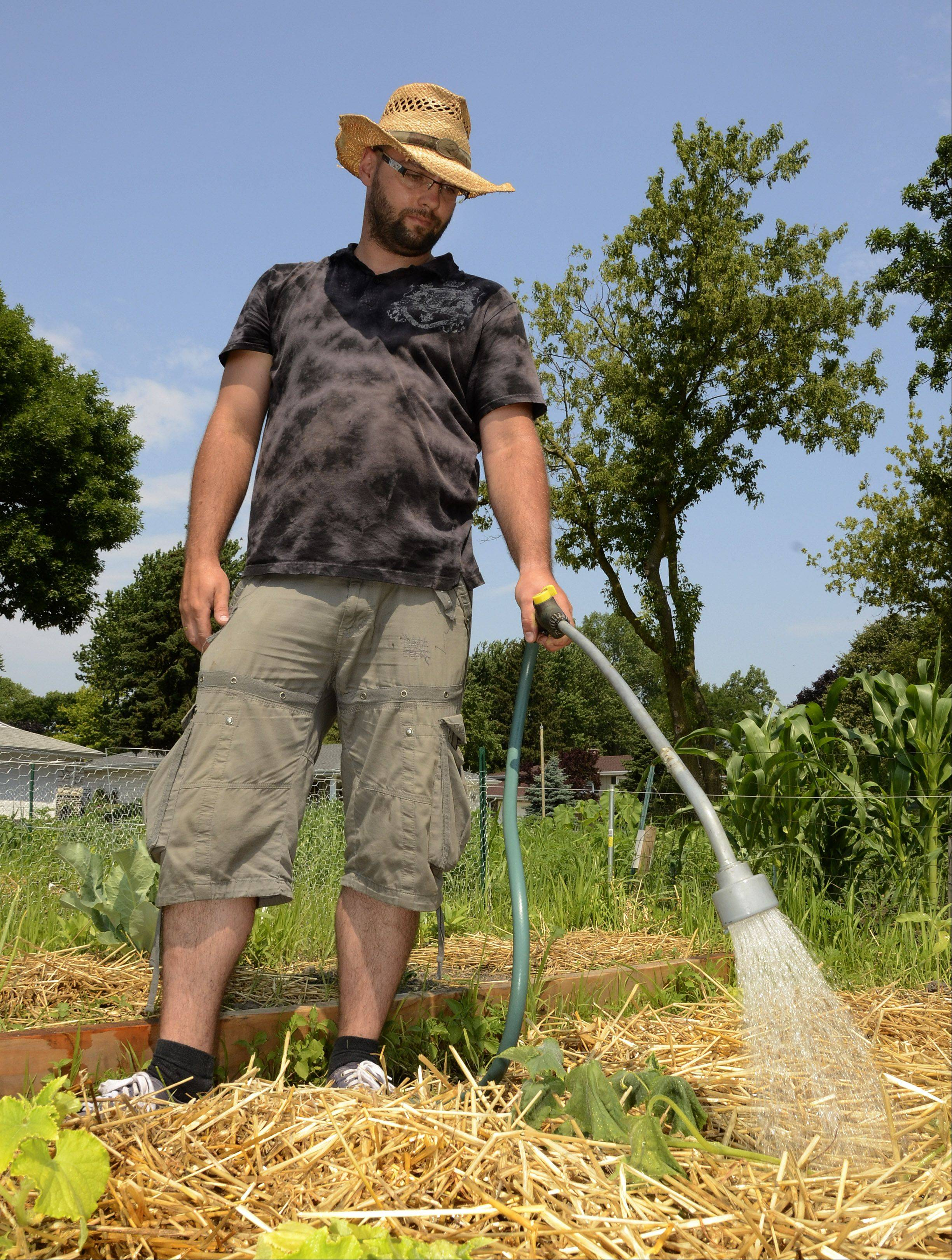 Conrad Mieszkowski of Chicago waters his plot in the Arlington Heights community garden to protect the plants from the soaring temperatures Thursday.