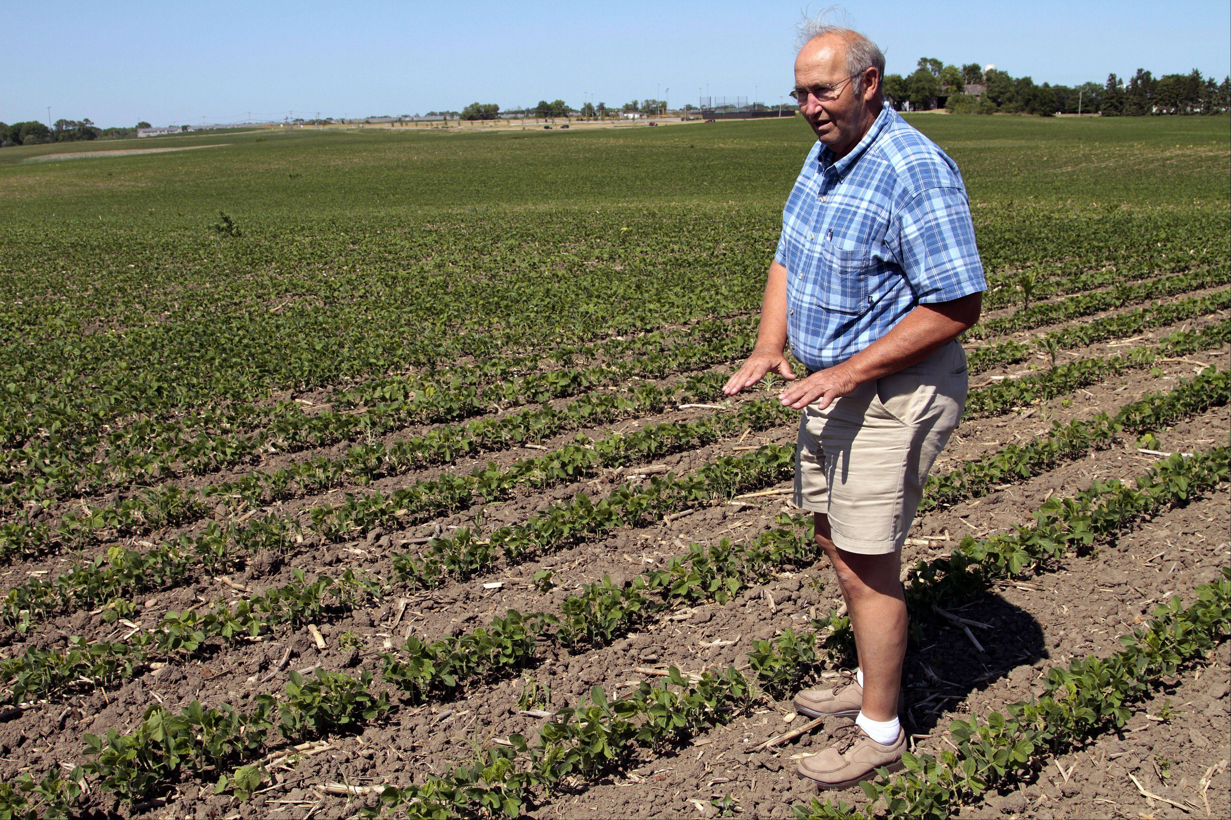 Lake County farmer Pete Tekampe examines one of his soybean fields near Grayslake that has been affected by the recent drought.