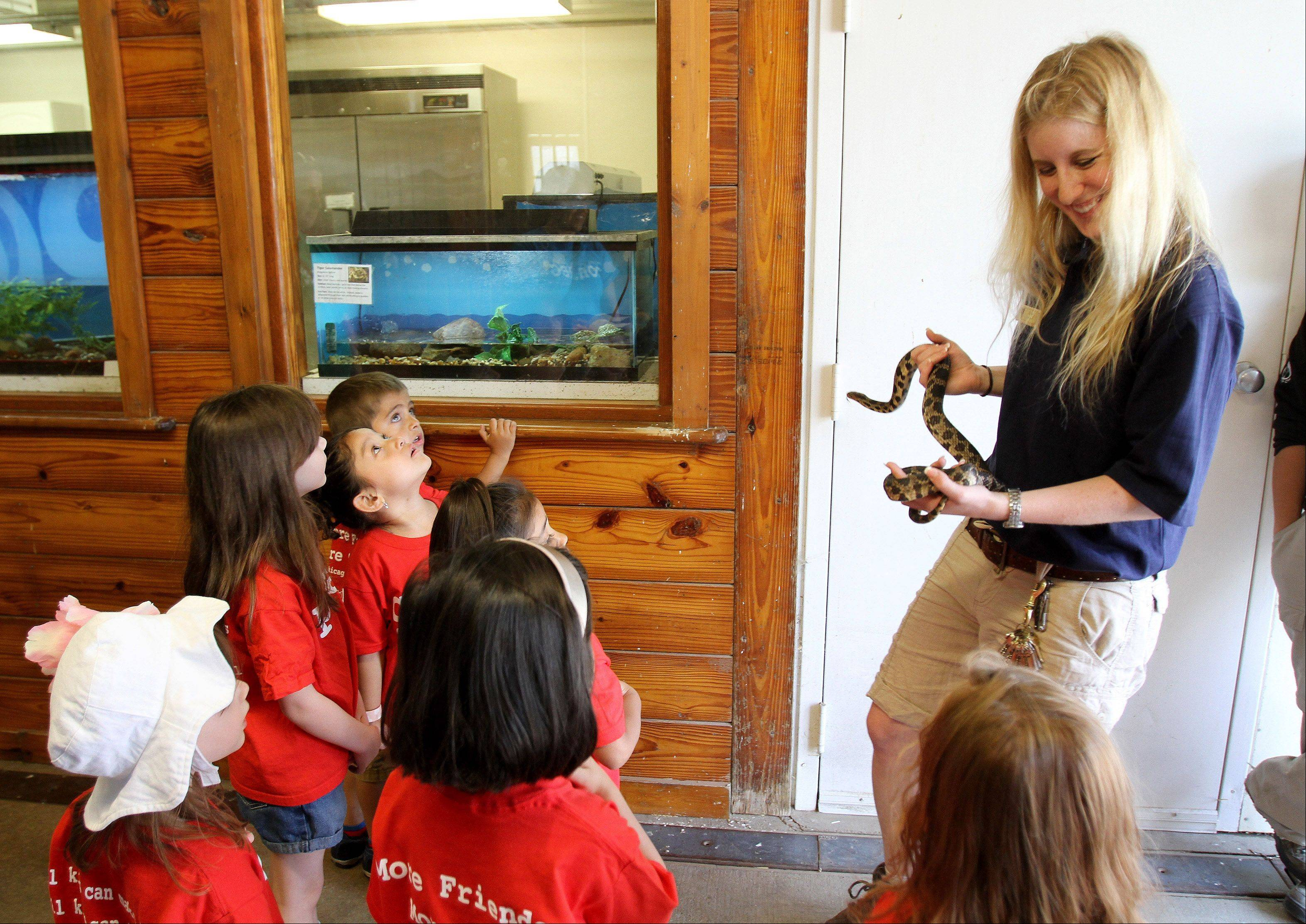 Lowe holds a fox snake for kids visiting from West Chicago, to see and touch during a Discovery Station program at the zoo.