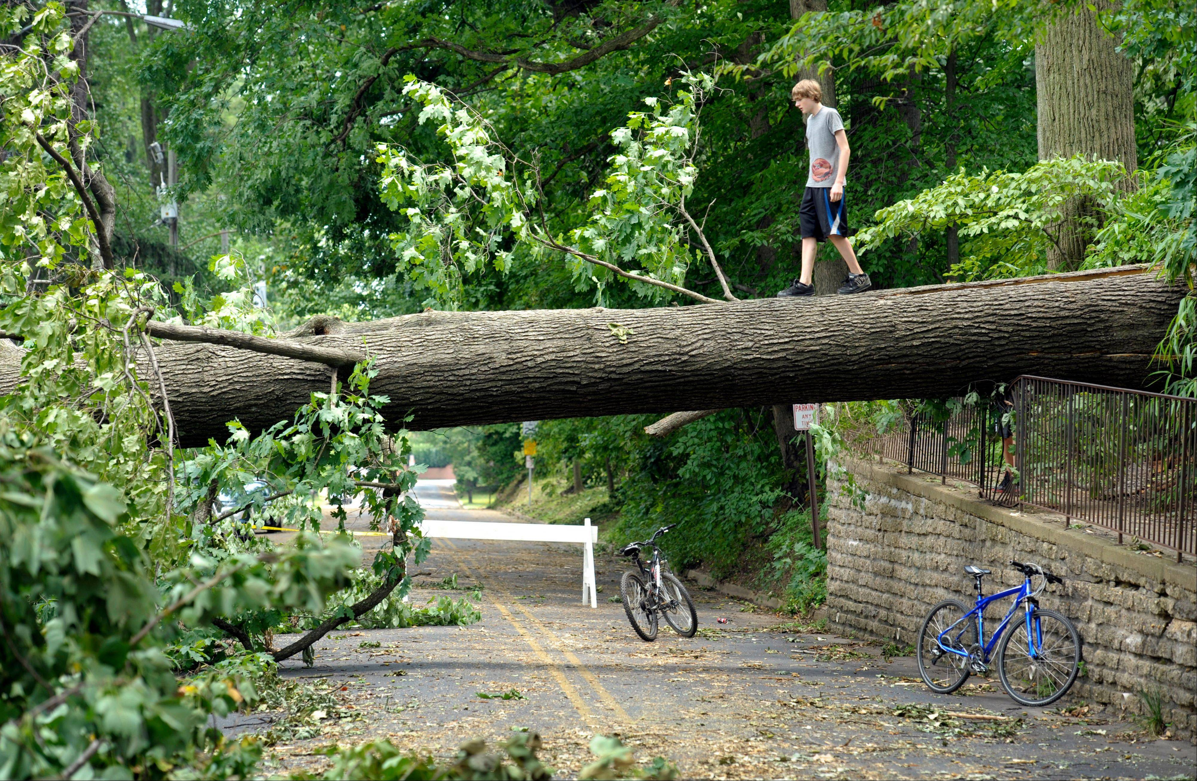 Tyler Taylor, 14, of Falls Church, Va., walks across a large downed tree in Falls Church, Va., Sunday. A severe storm late Friday knocked out power to approximately one million residents, traffic signals and businesses in the region.