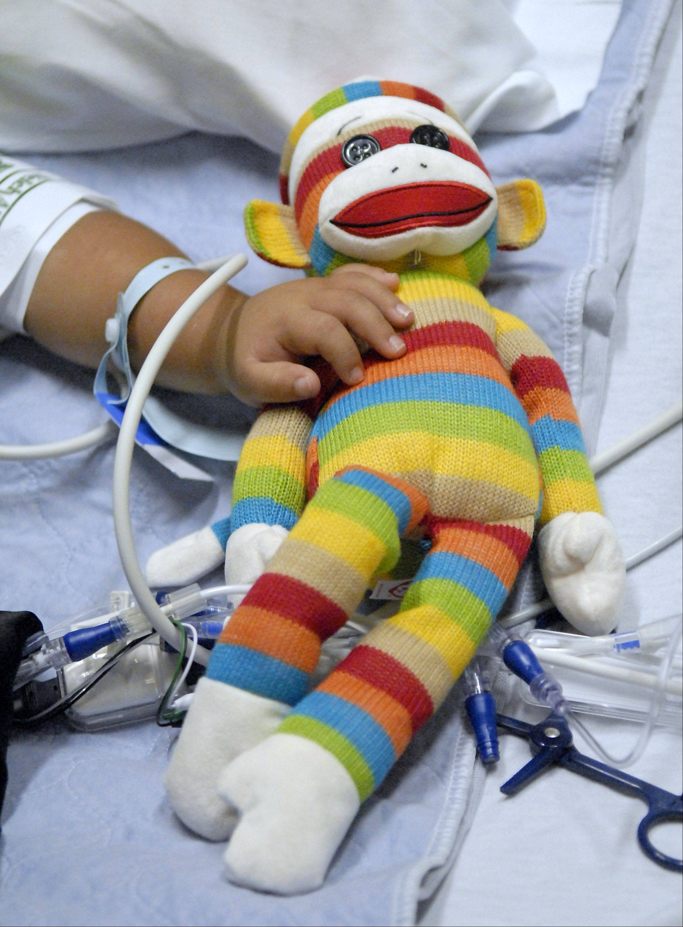 "Nathan Saavedra, 3, of Carpentersville, can't keep his hands off the stuffed monkey that his kidney donor, Kalin Koychev, 33, of Wheeling, brought to him when he and his wife, Sevda, paid a surprise visit on Wednesday. ""Ever since he got it, he touches it all the time,"" said Nathan's mother, Tina. ""He's not big on stuffed animals, either."""