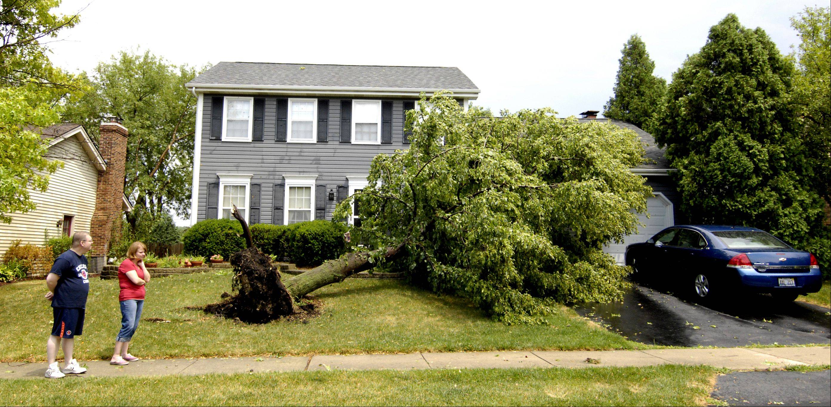 Mike and Julie Malone inspect the damage from a tree knocked over in front of their Winfield home Sunday afternoon. Heavy storms moved through the suburbs Sunday, downing trees and power lines and leaving more than 200,000 ComEd customers without electricity.