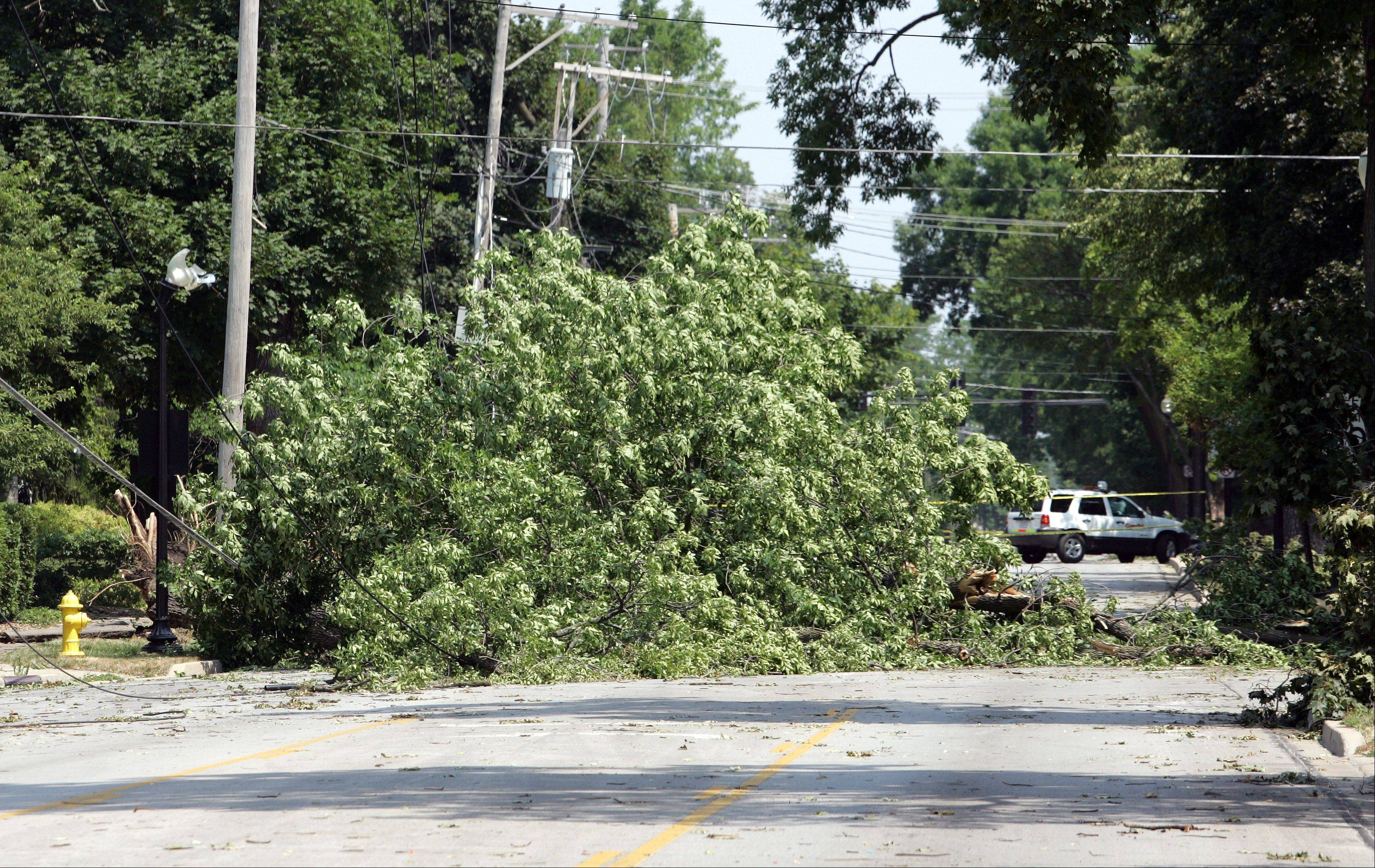 A large tree blocks Main Street in Wheaton.