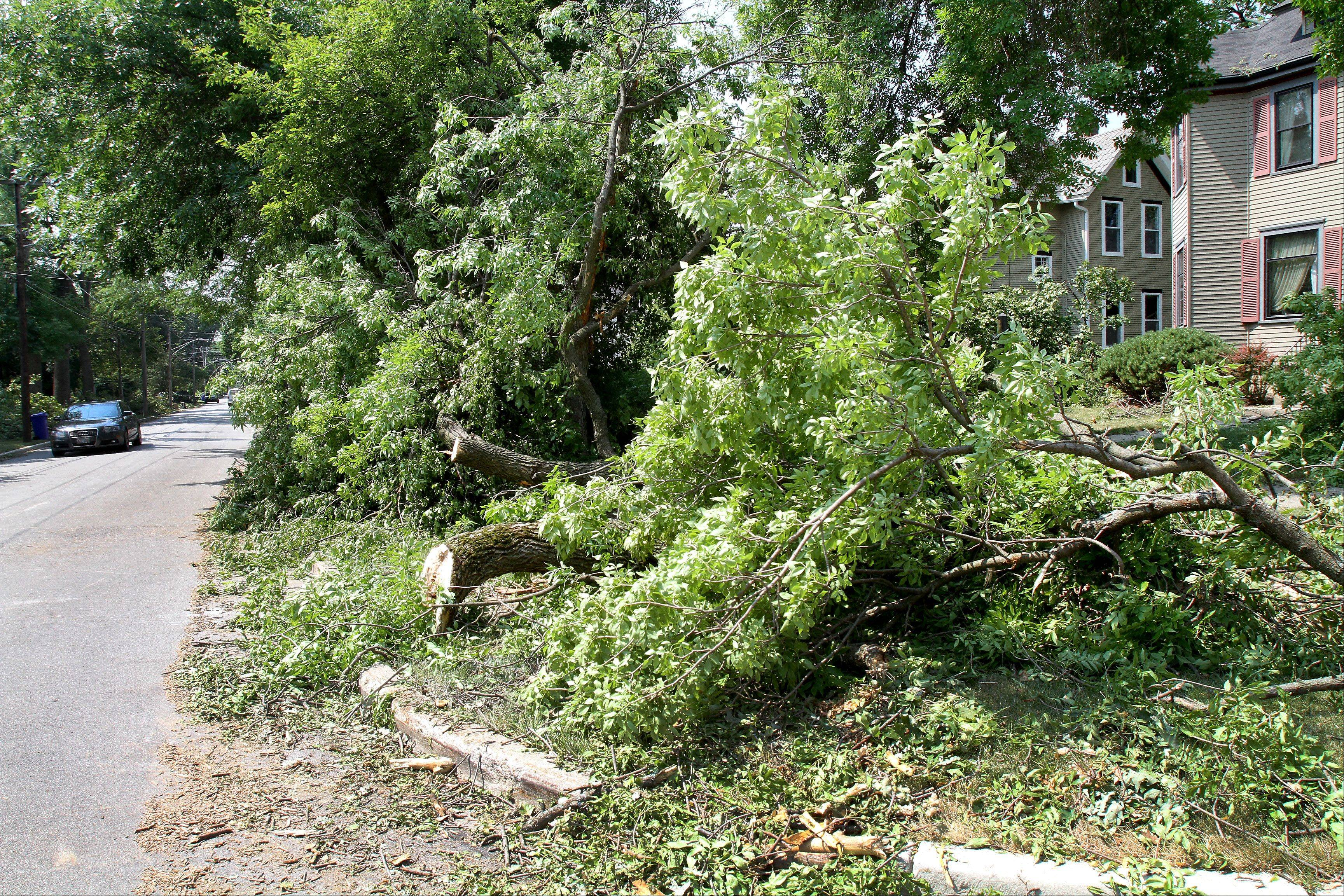 Sunday's storms knocked down trees throughout many towns in DuPage County.