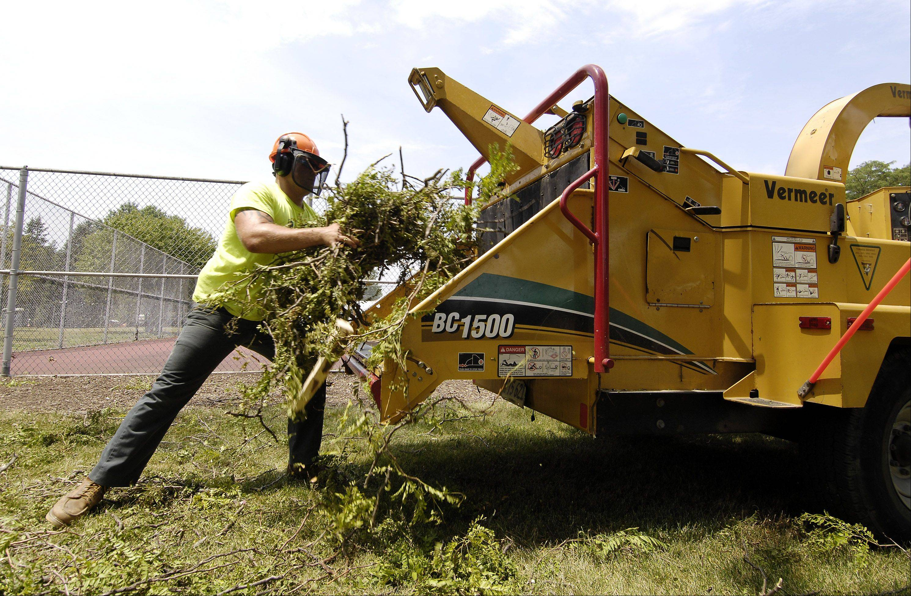 Lombard Park District workers, including Chad Flint, were clearing fallen branches Tuesday at Madison Meadow Park in preparation for the Taste of Lombard.