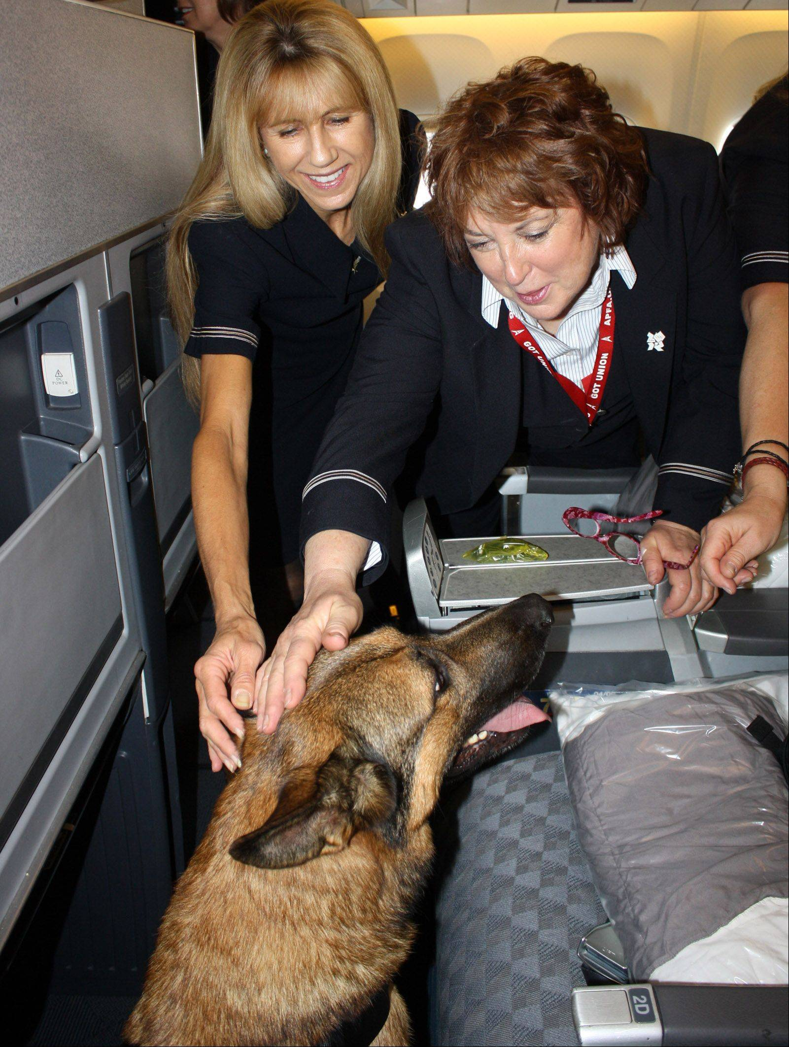 Lucca receives plenty of attention from American Airlines flight attendants at O'Hare International Airport on Thursday.