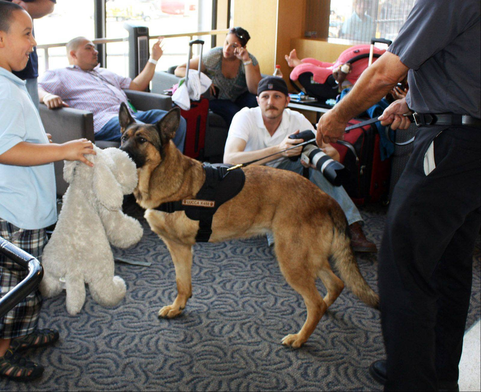 Lucca gets plenty of attention from travelers at O'Hare International Airport on Thursday.