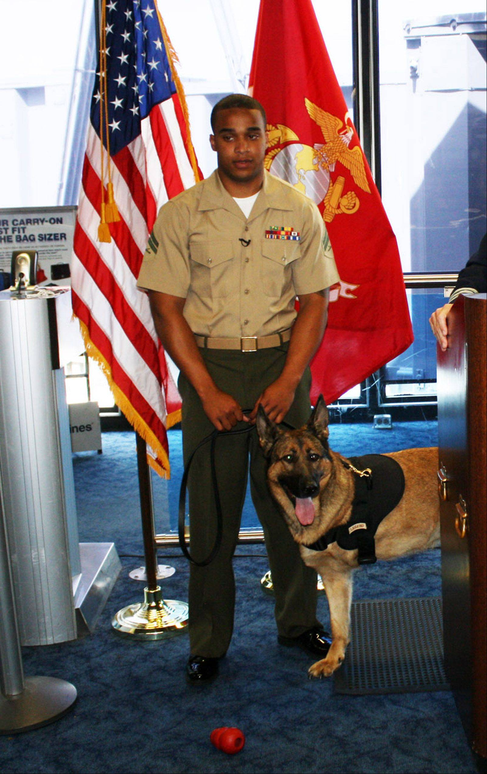 Lucca waits with Marine Cpl. Juan Rodriguez at O'Hare International Airport on Thursday. The injured military dog is on her way to retirement in Finland.