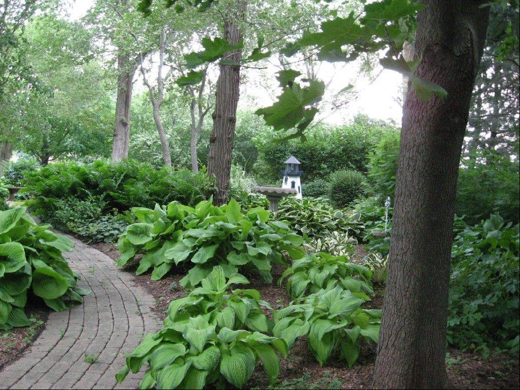 A Harvard garden features a shady garden with a dramatic look featuring groupings of plants based on textures and colors alongside a walking path. This garden is one of seven private gardens featured at the MCC and U of I Extension Master Gardeners of McHenry County Garden Walk on Saturday, July 14. The Harvard Community Garden and the Demonstration Garden at McHenry County College are also included.