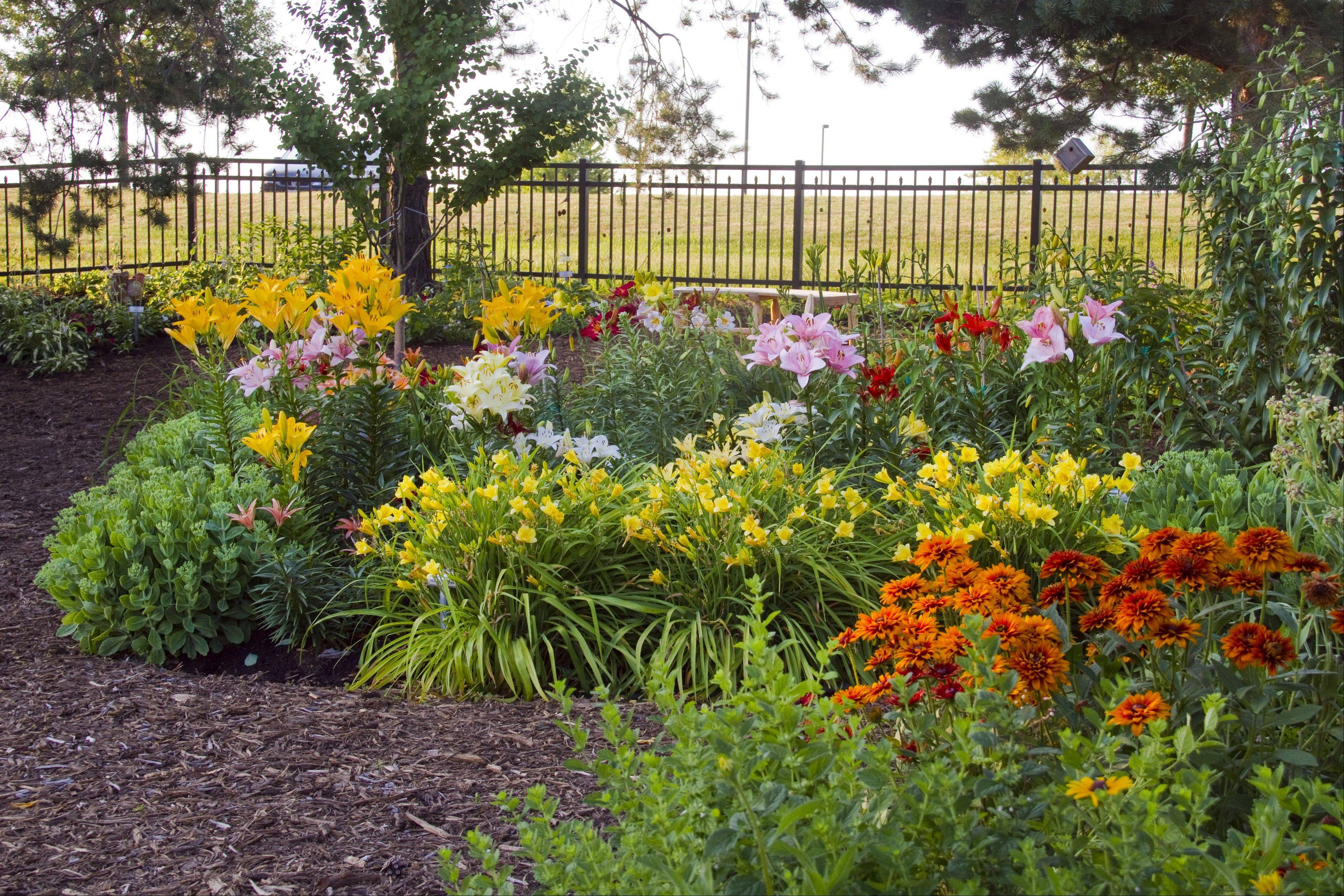 The Demonstration Garden at McHenry County College, tended by the U of I Extension Master Gardeners of McHenry County is the starting point for the annual MCC and U of I Extension Master Gardeners of McHenry County Garden Walk on Saturday, July 14. The demo garden features eye-popping annuals grown from seed by volunteers in the college greenhouse and perennials for both sun and shade, along with a theme garden.