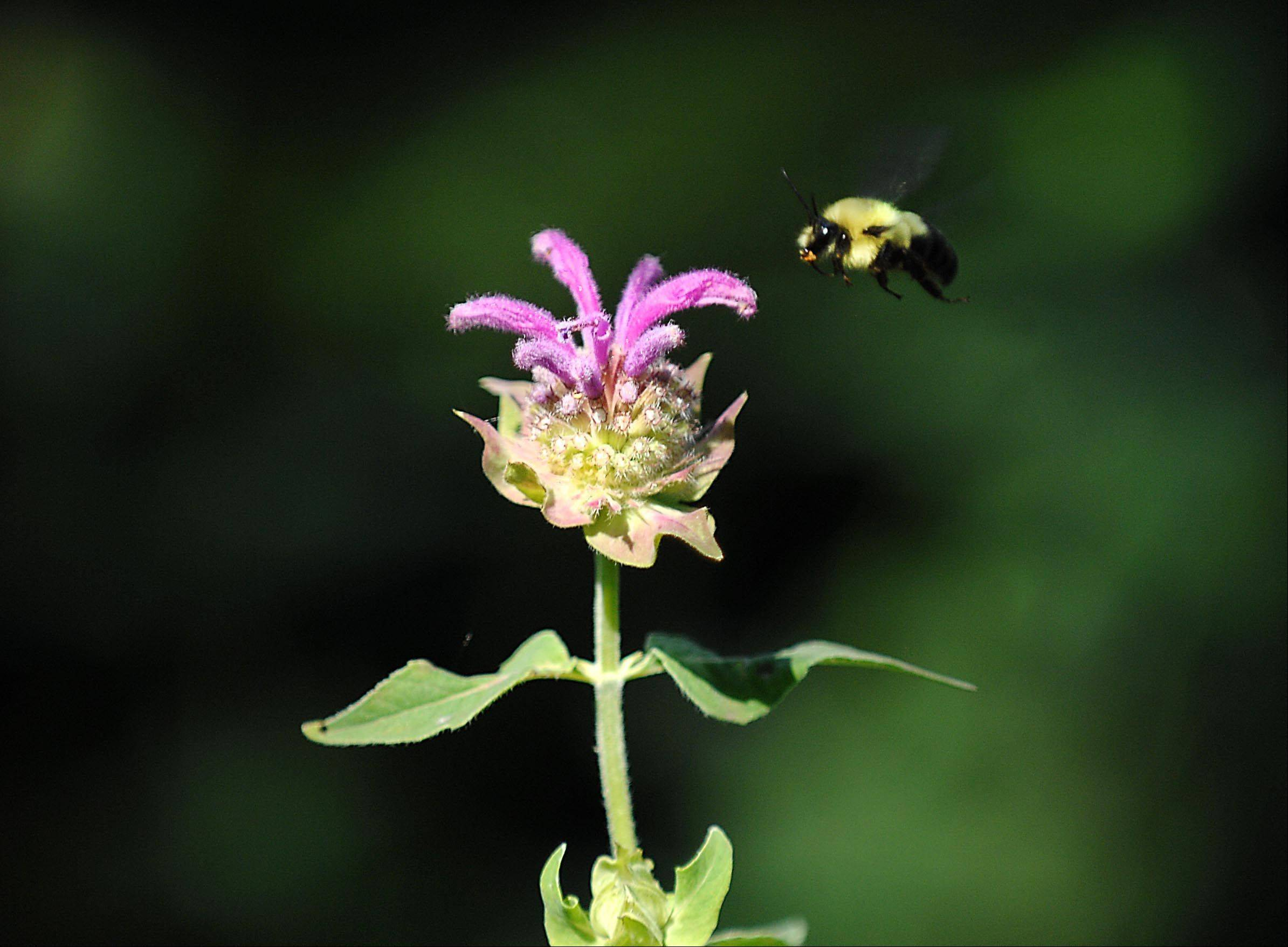 This is what it's all about for many Bull Valley gardeners -- encouraging bees and other animals.