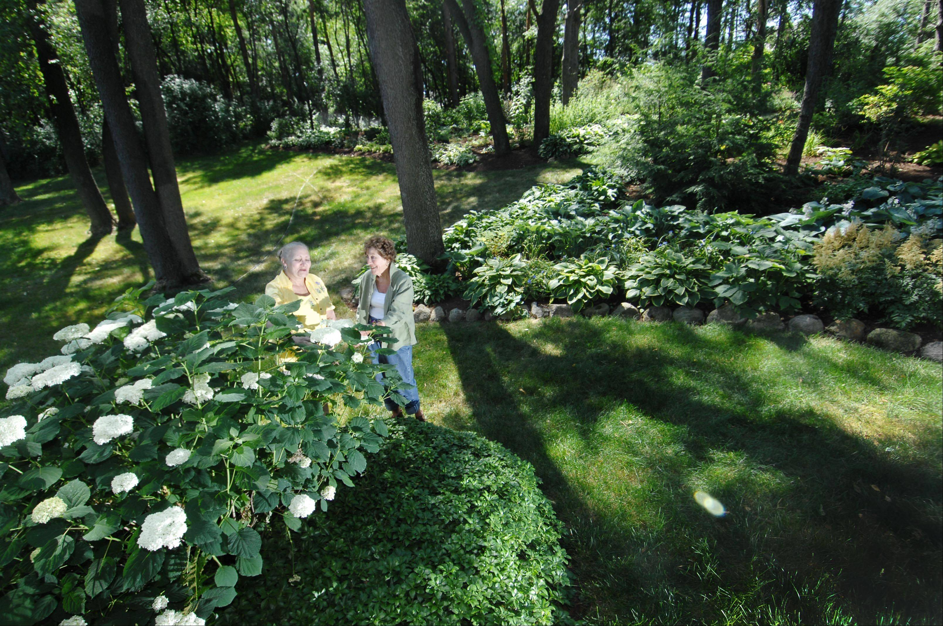 Debby Staley, co-chair of Bull Valley's Garden Treasures garden walk, and Nancy Jung, one of the garden coordinators, show off one of many hydrangeas in Tranquility Trails.
