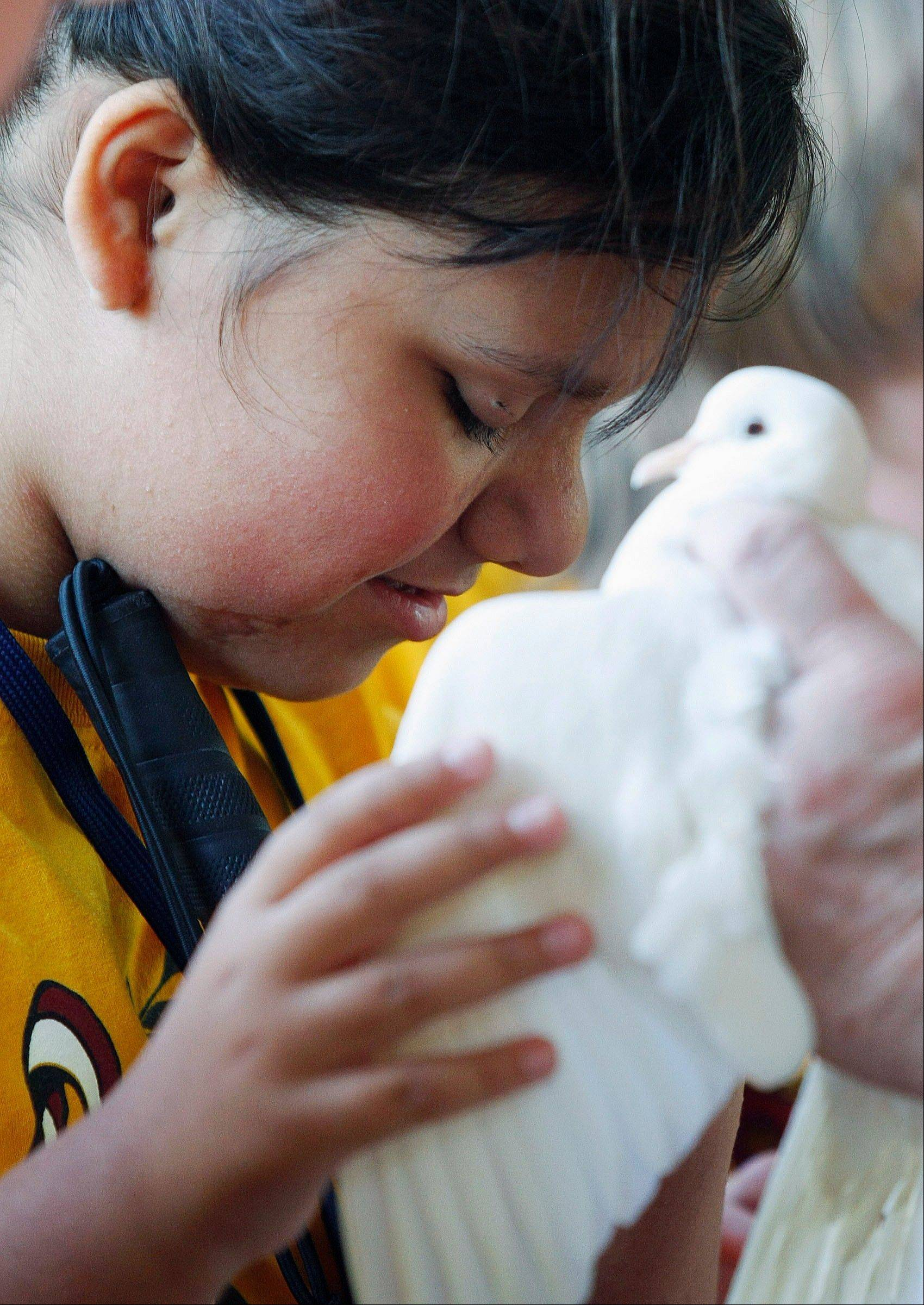 Nina Vargas, a member of the Illinois School for the Visually Impaired Young Explorers camp, feels the wing of a live ringneck dove during the camp�s first ever visit to the Illinois Raptor Center in Decatur.