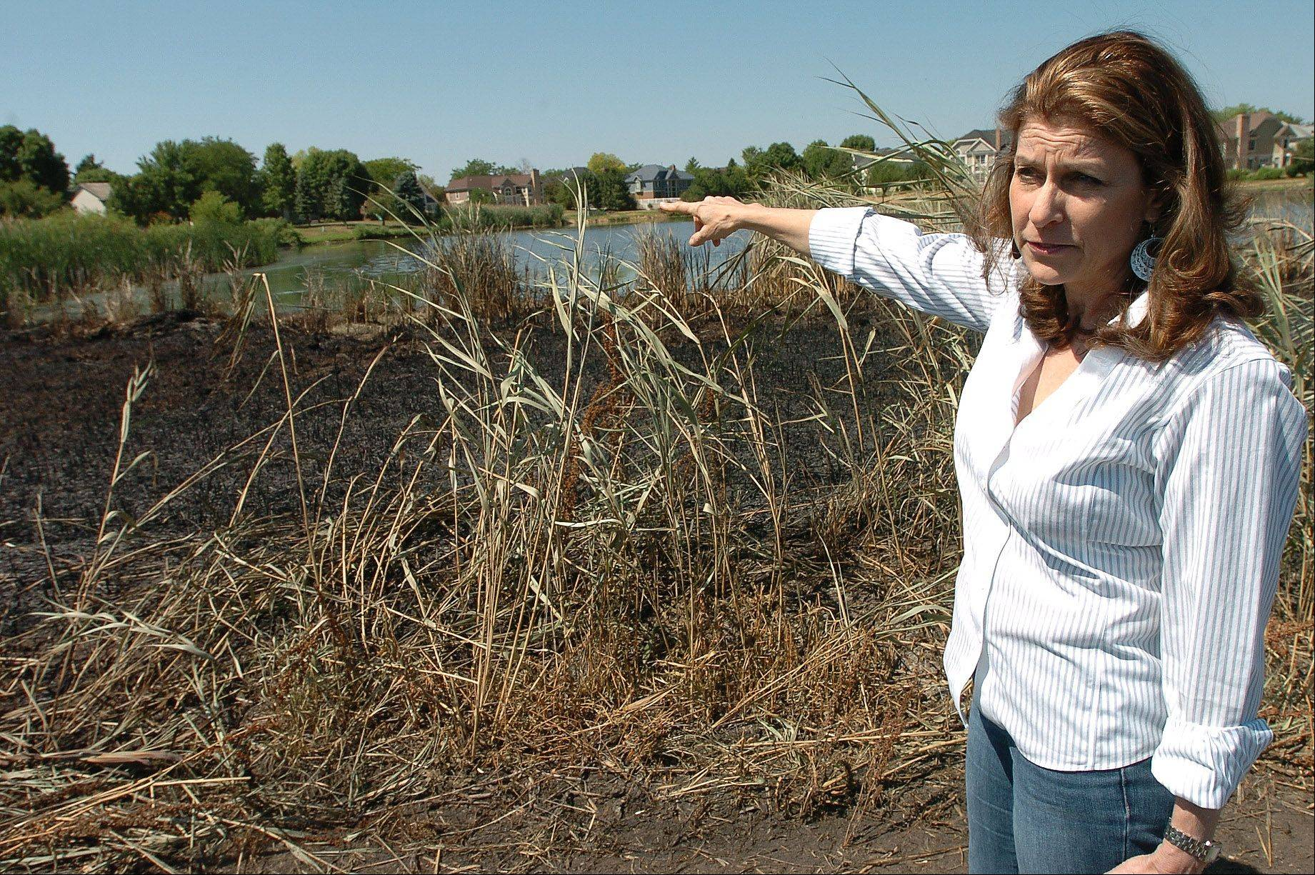 Susan Zerin discusses the fire in the field behind her house.