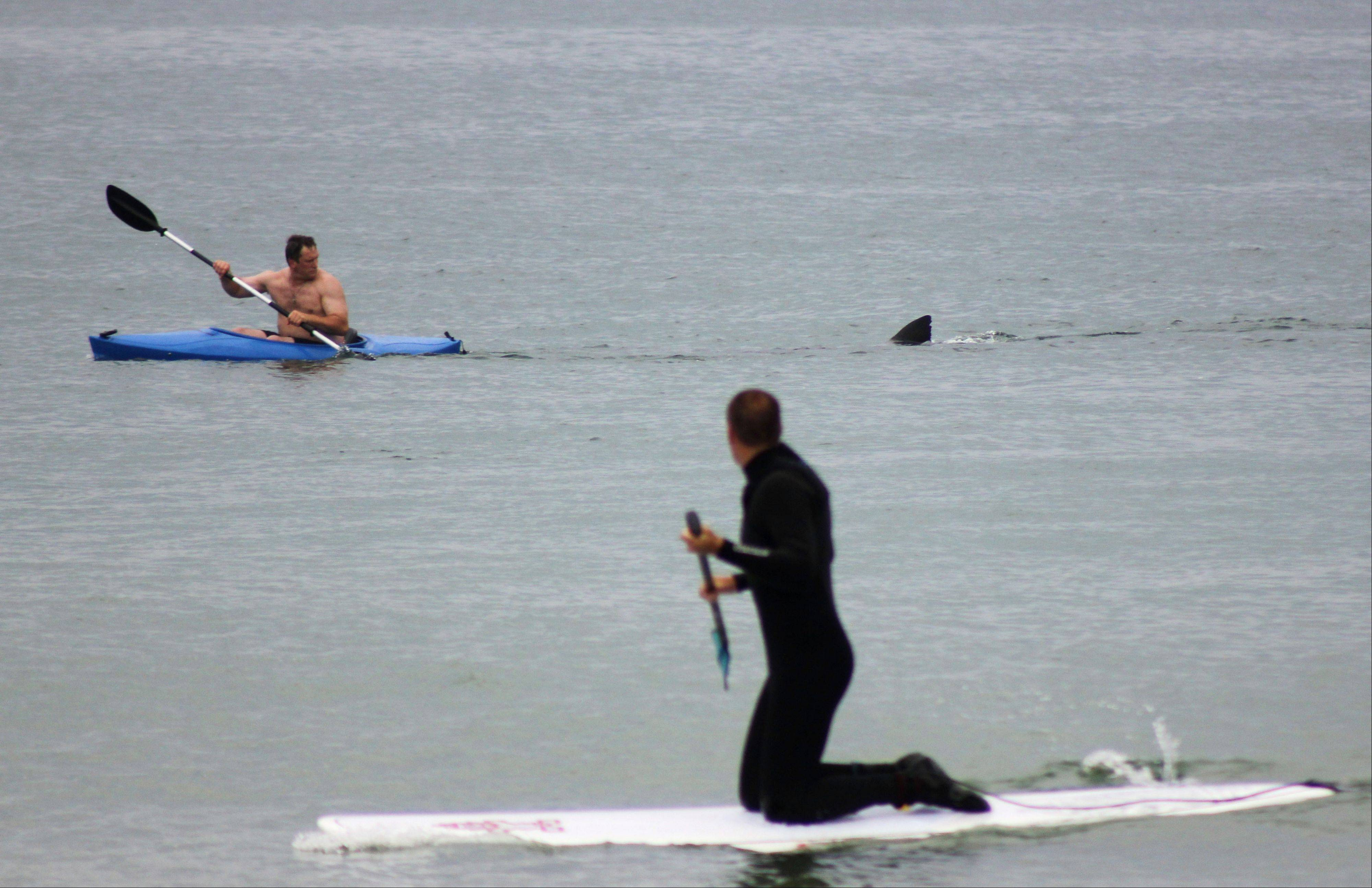 Walter Szulc Jr., in kayak at left, looks back at the dorsal fin of an approaching shark at Nauset Beach in Orleans, Mass. in Cape Cod on Saturday, July 7. The state's top shark expert says the fin likely belonged to a harmless basking shark, a giant fish that feeds on nothing but plankton.